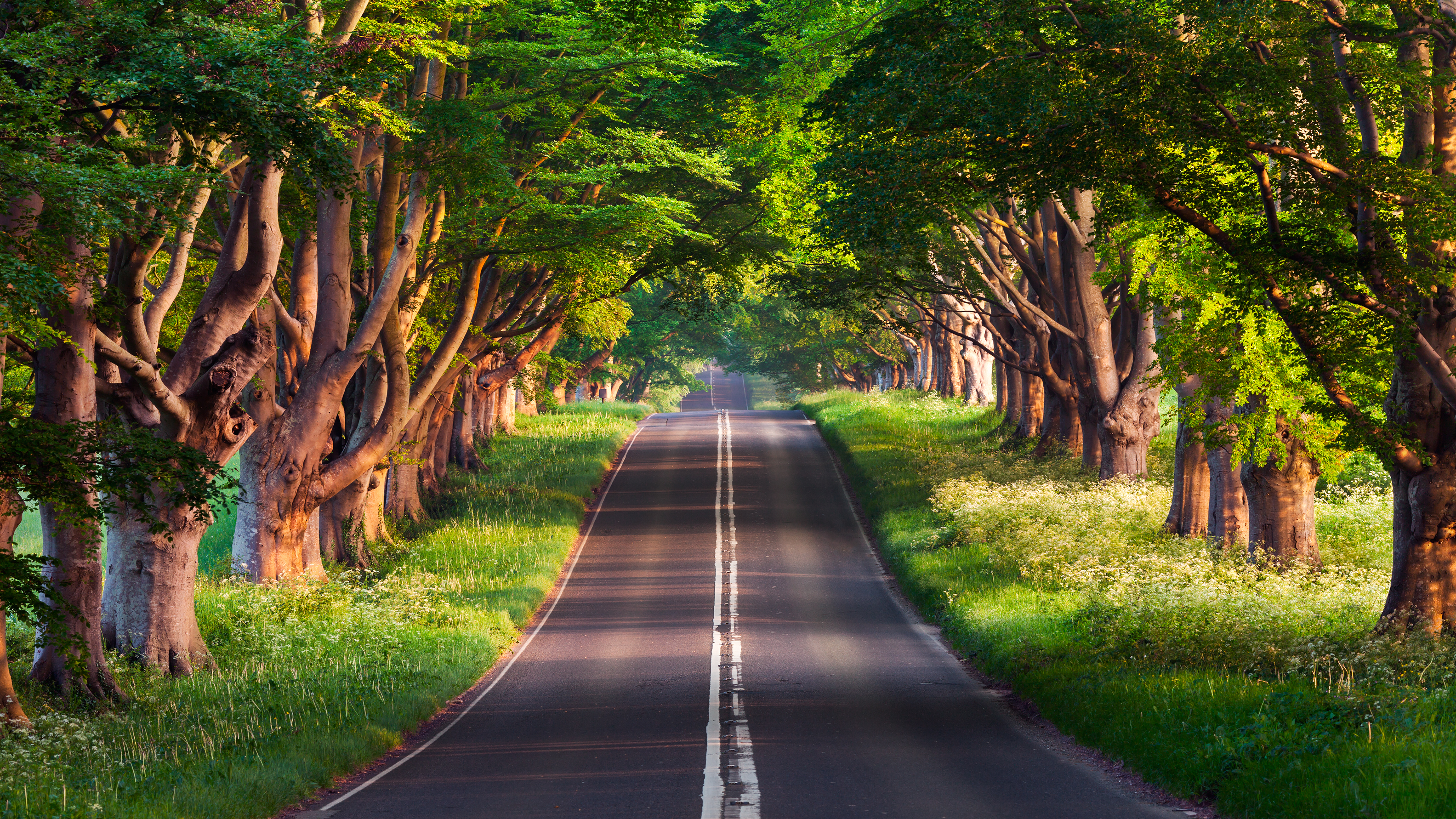 UHD 4K Blanford Road and Natures Wallpaper Backgrounds