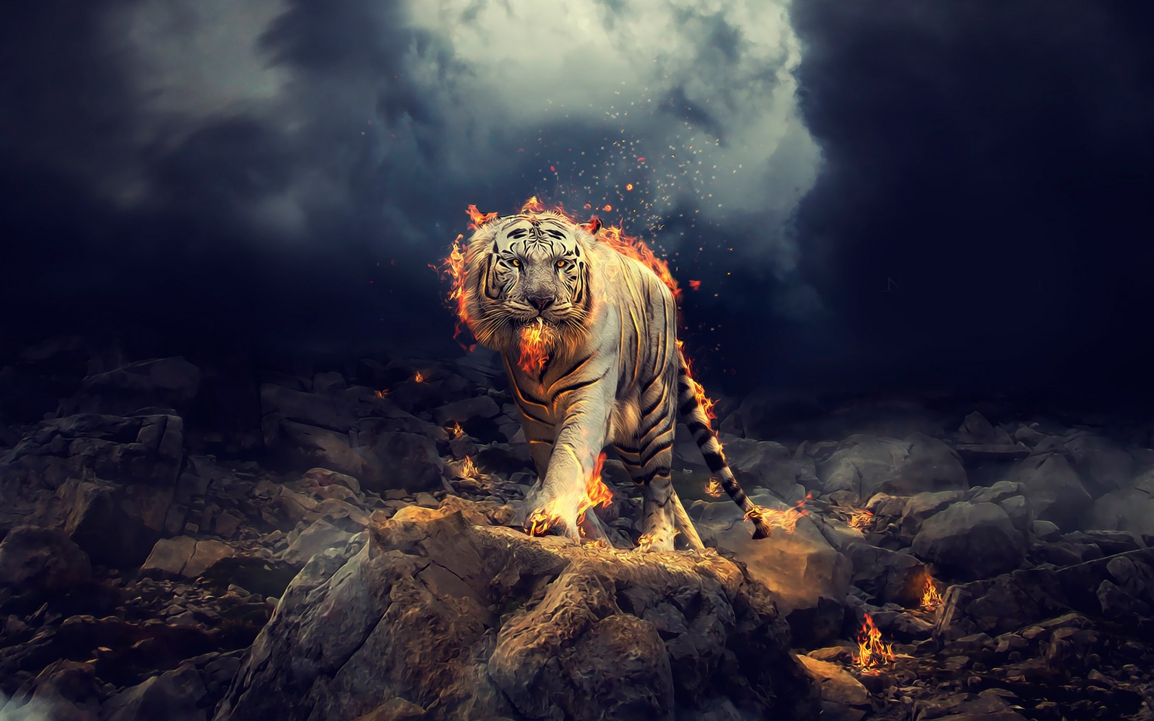 white tiger 1680x1050 fire 4k animal, 4k images, 4k white tiger, hd