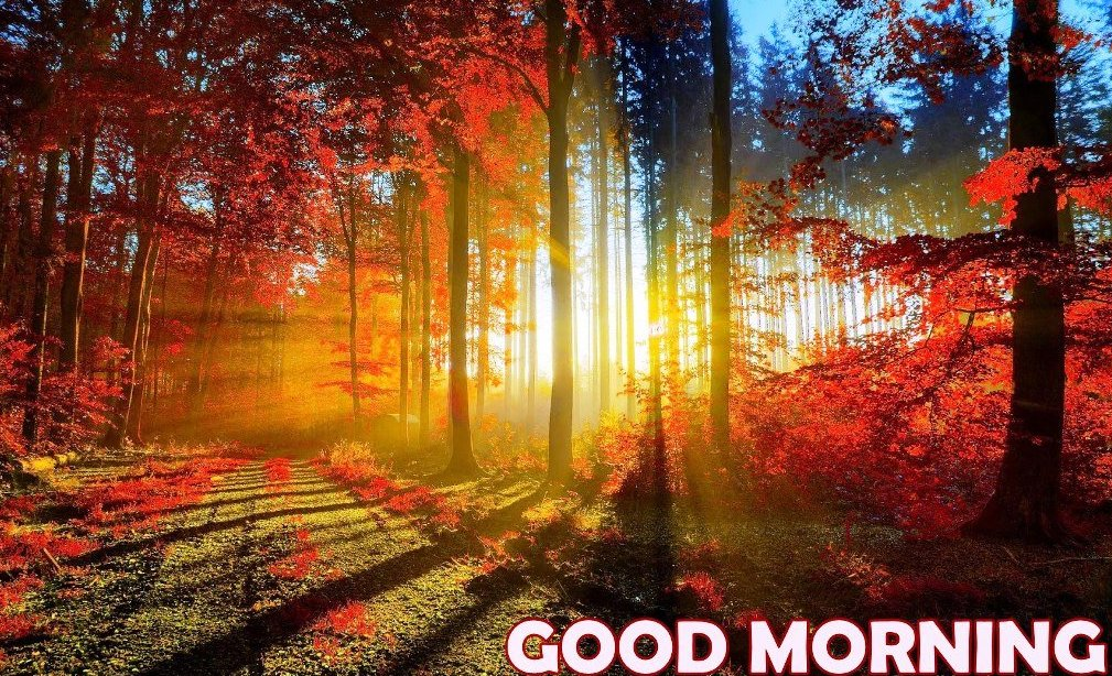 Beautiful Good-Morning Nature Image