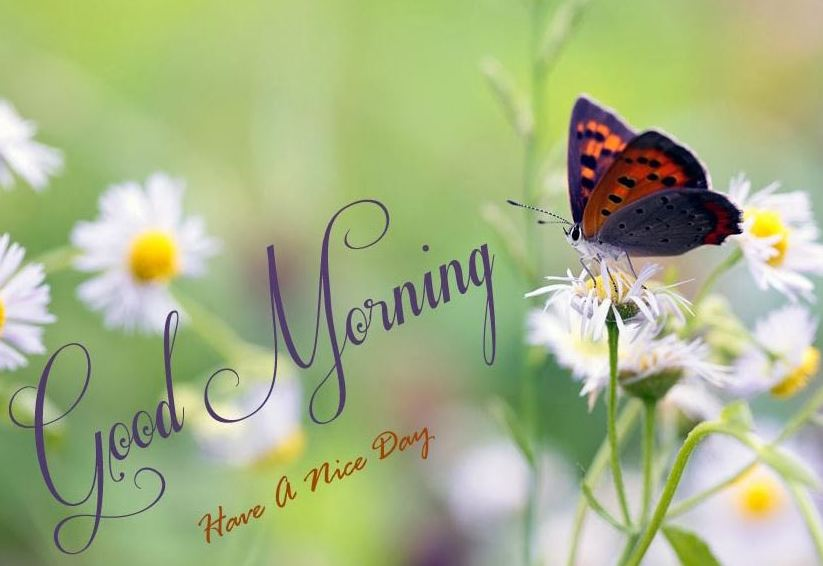 Cool good morning pictures with nature, hd walepaper, free wallpaper