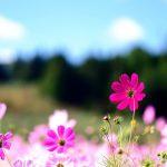 Flower Desktop Background