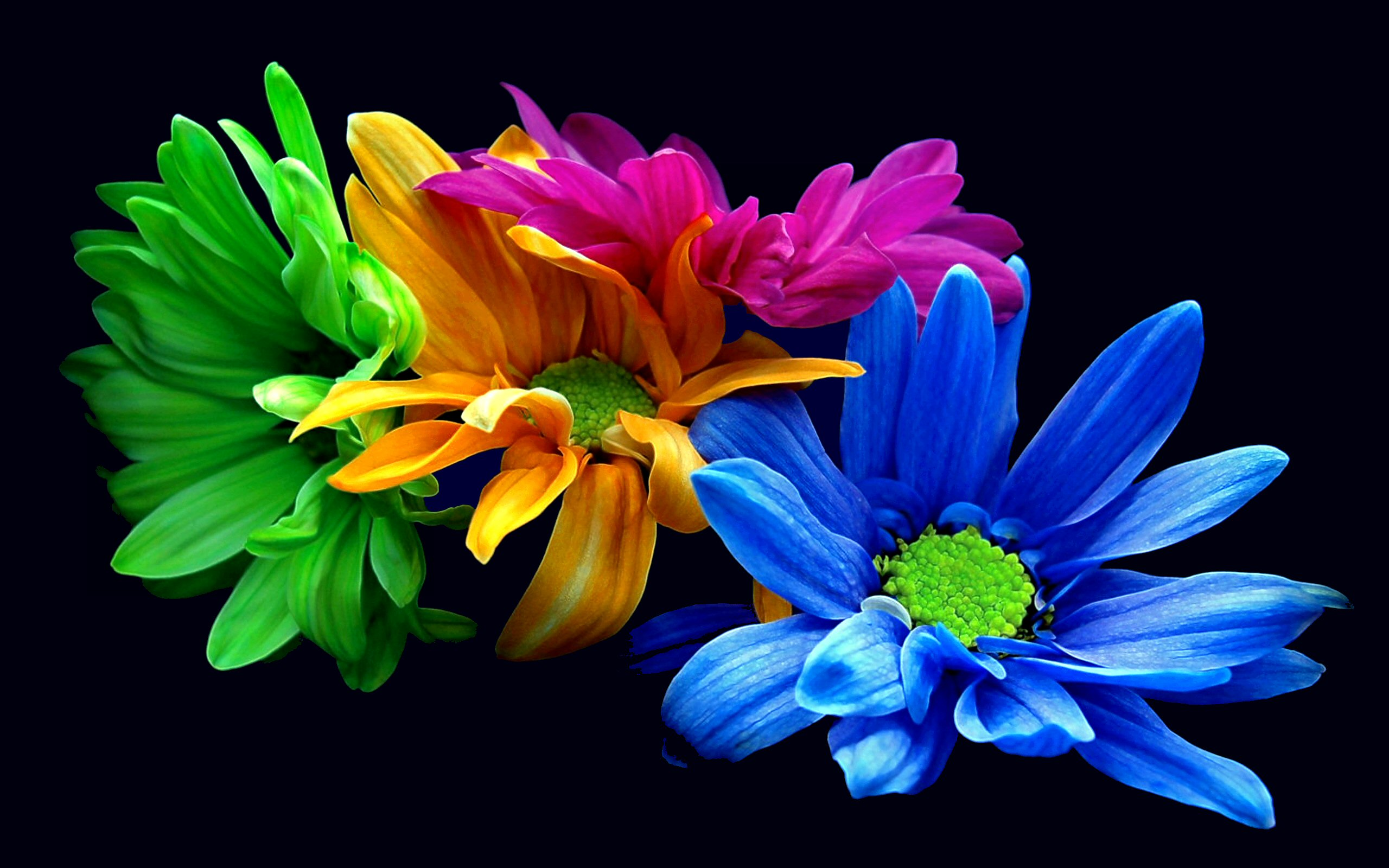 Flower Hd Wallpaper Colors