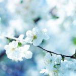 Flower Wallpaper Desktop