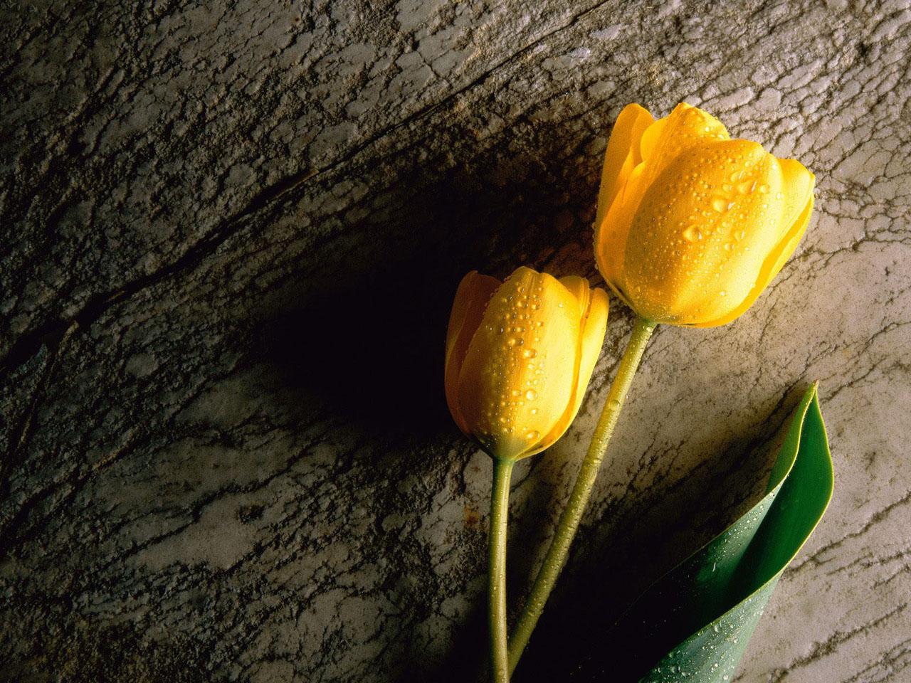 Flower Wallpaper Hd Yellow