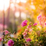 Free Stock Photo of Flowers Garden Pink Bloom