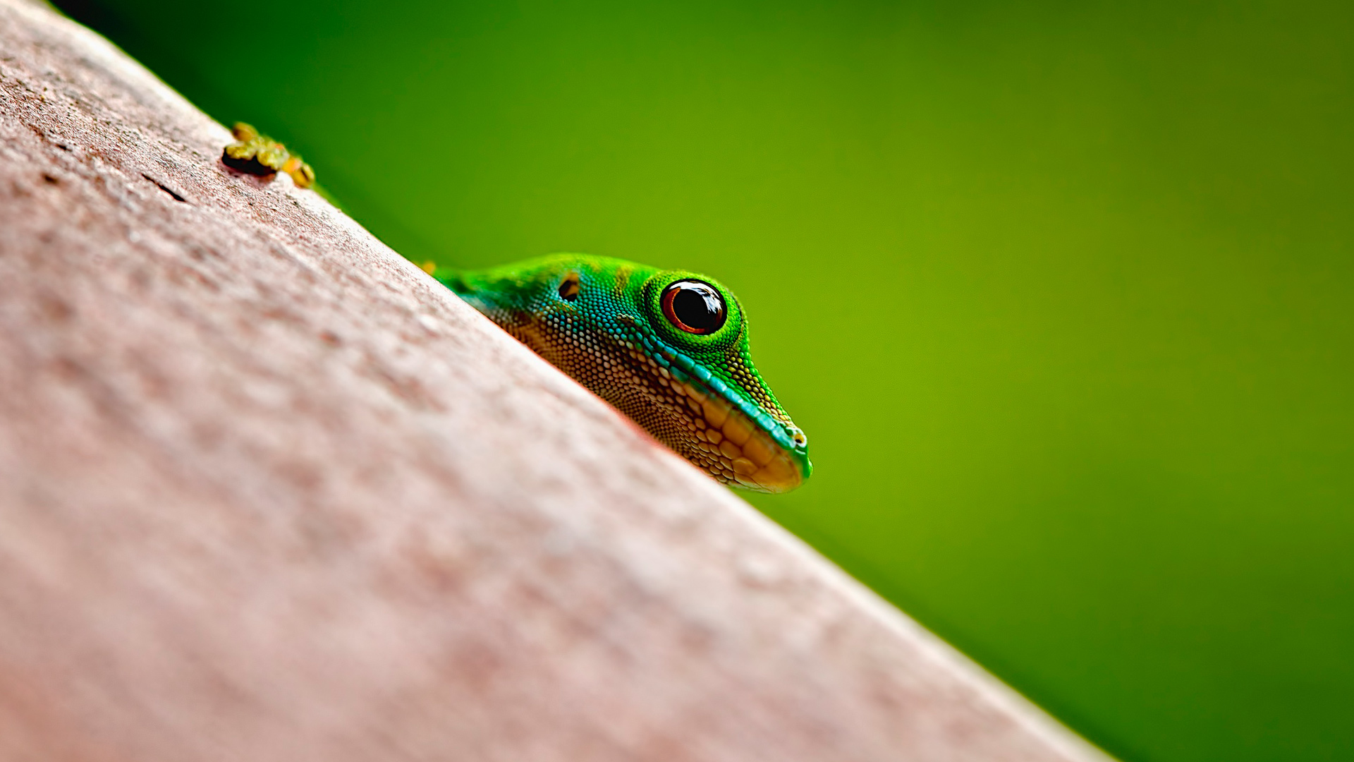 Frog Gionee Android Stock Wallpaper Download - High