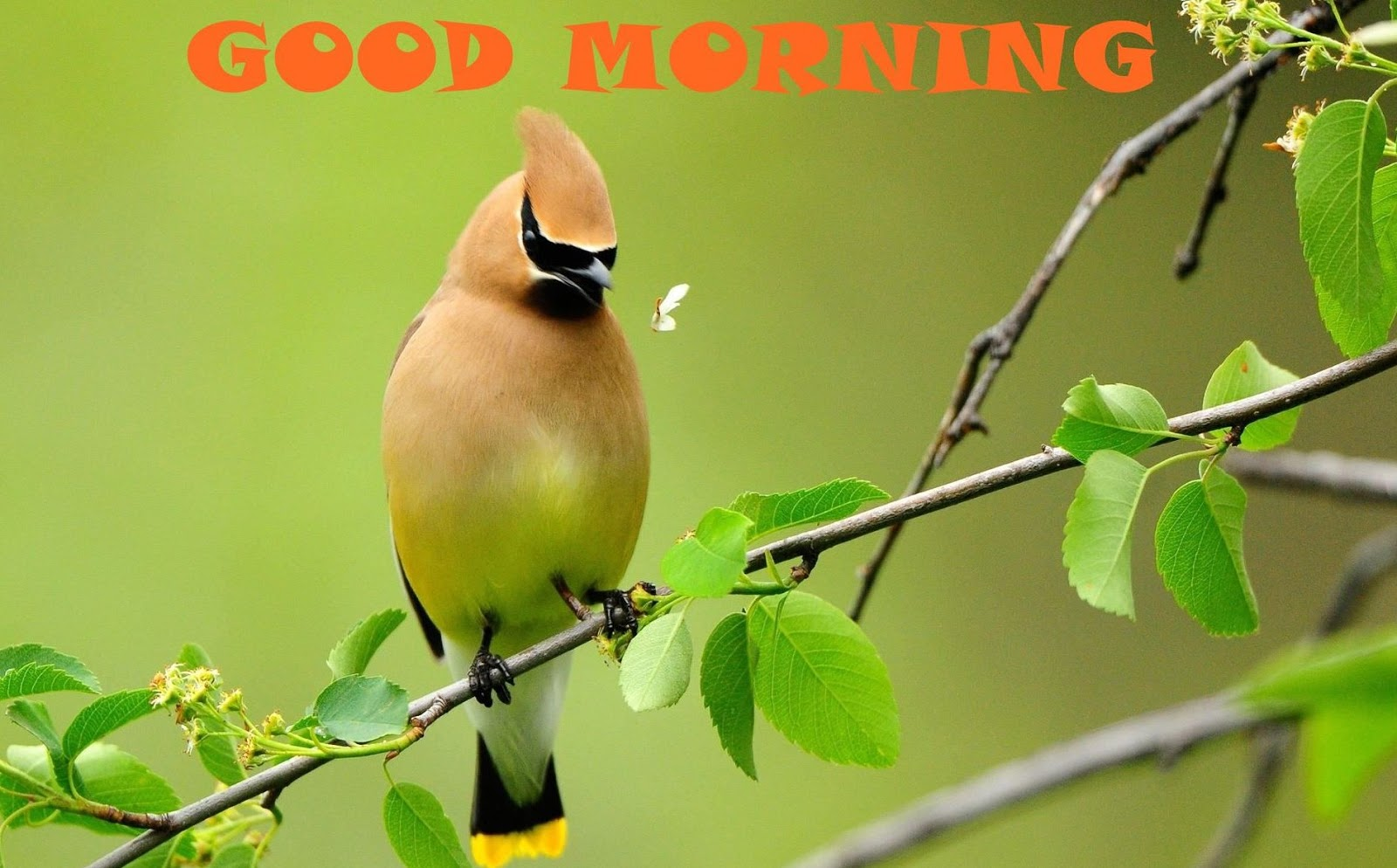 Good Morning Cute Bird HD Wallpaper