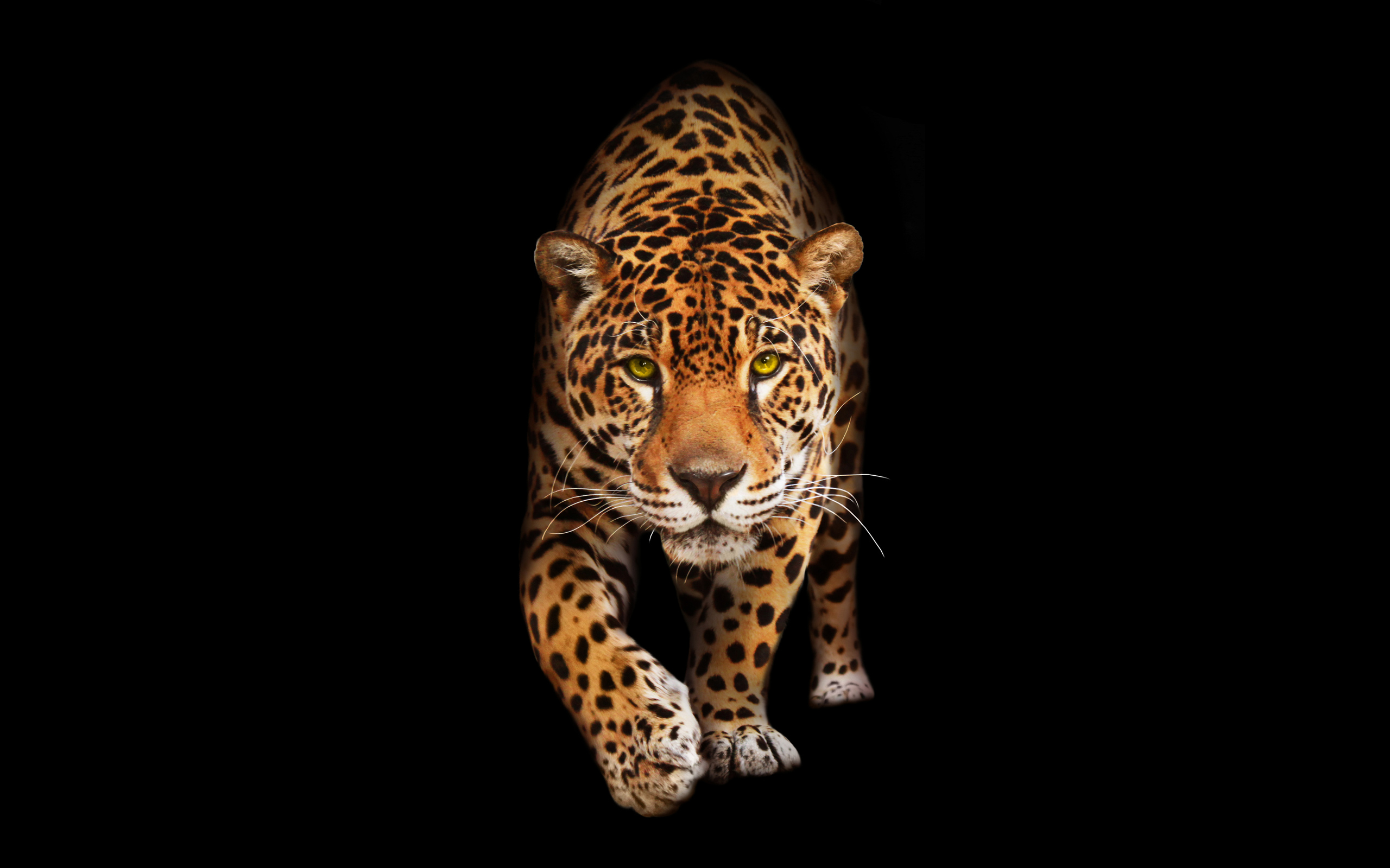 Wild Cat Jaguar HD