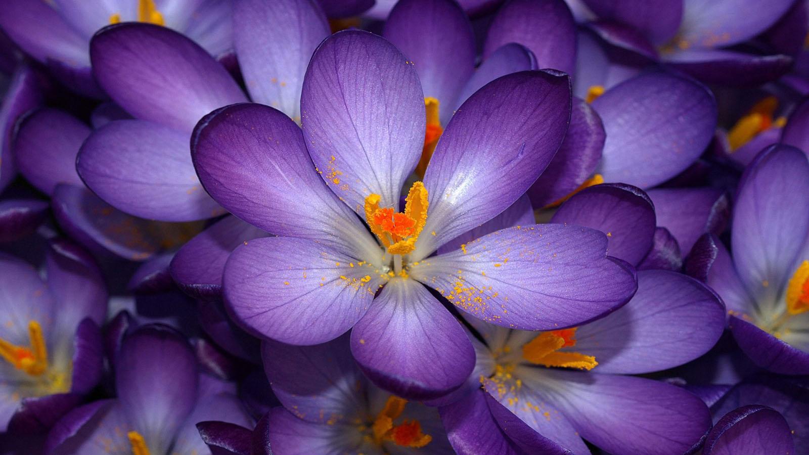 beautiful flower wallpapers hd