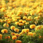 Beautiful Yellow Flower Wallpapers