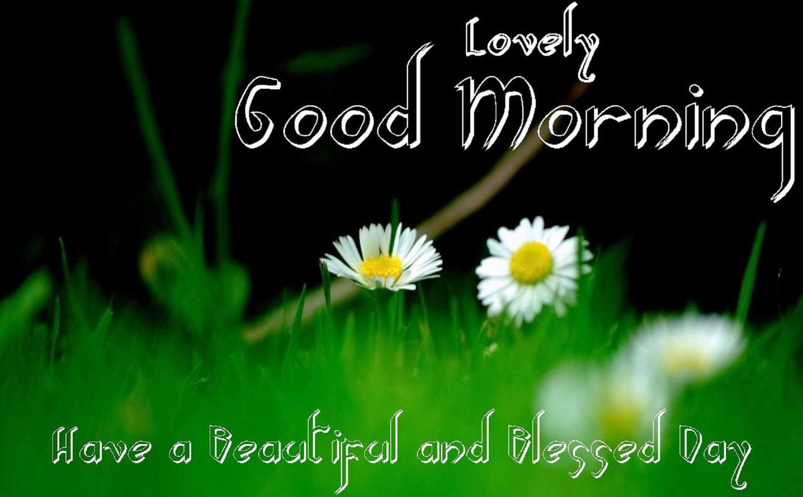 good morning flowers hd