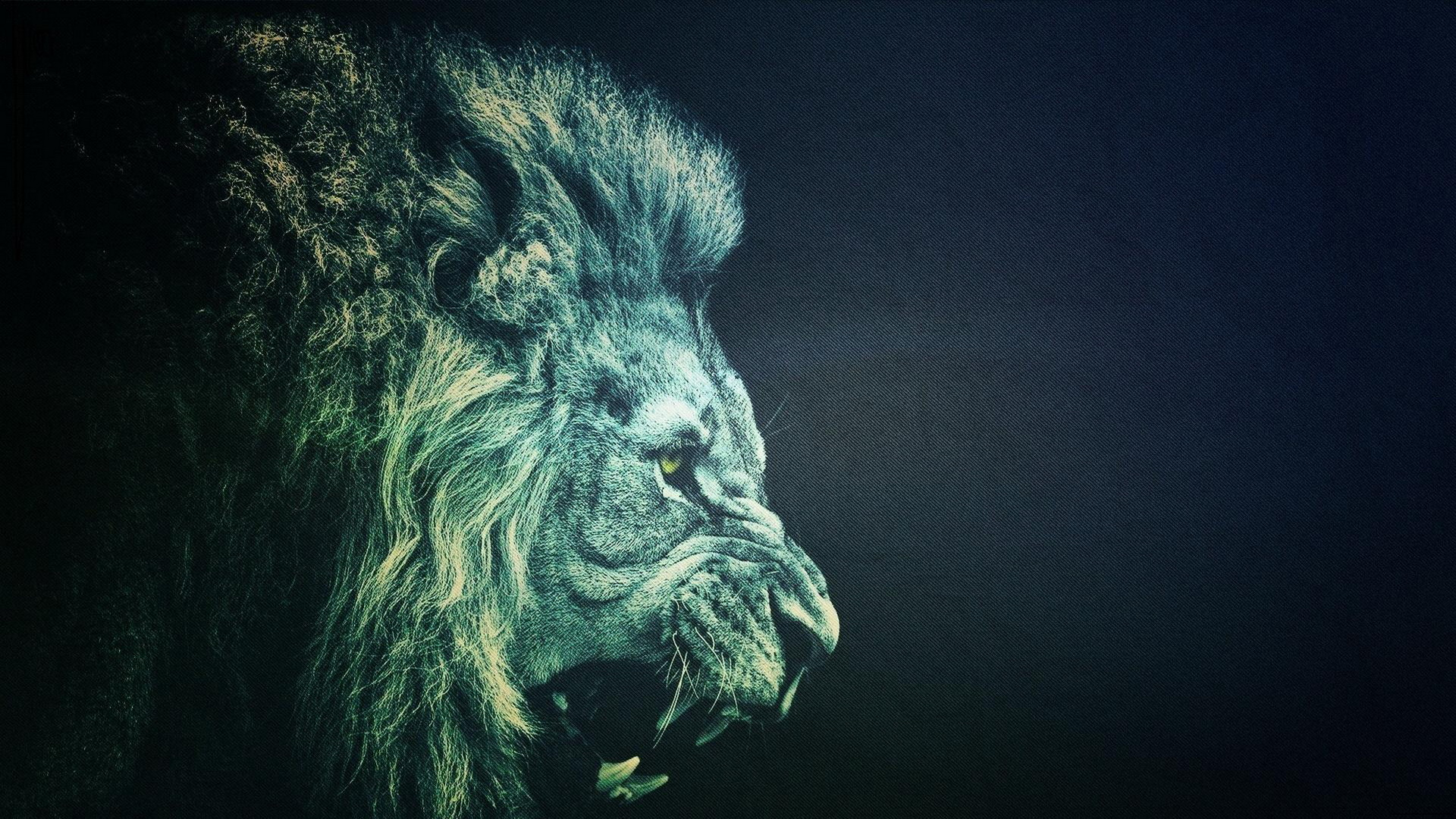 Lion Full HD Best Wallpaper and Background