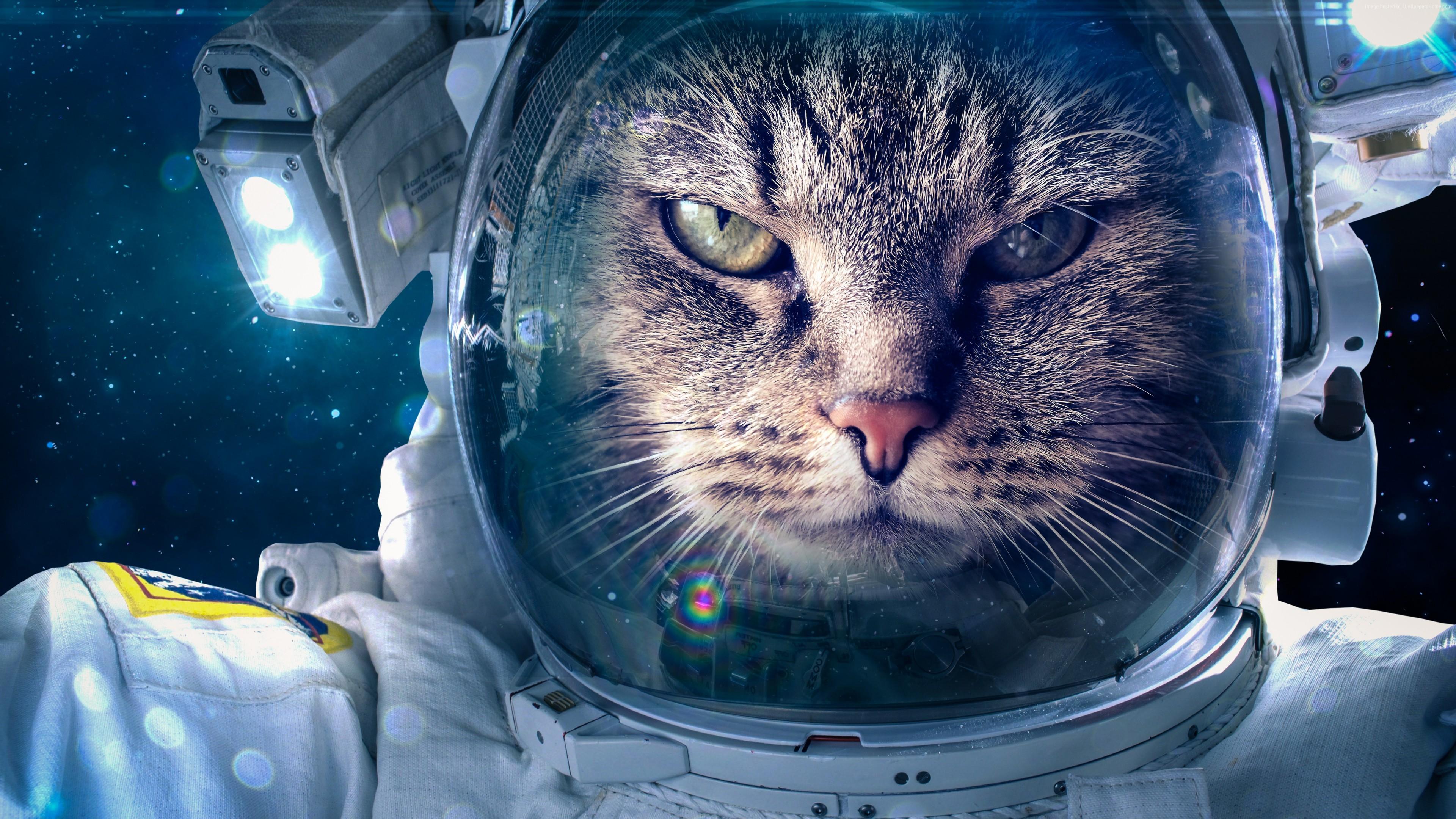 Stock Images Astronaut Funny Animals Cat 4k 5k Stock Images Wallpaper Download High Resolution 4k Wallpaper