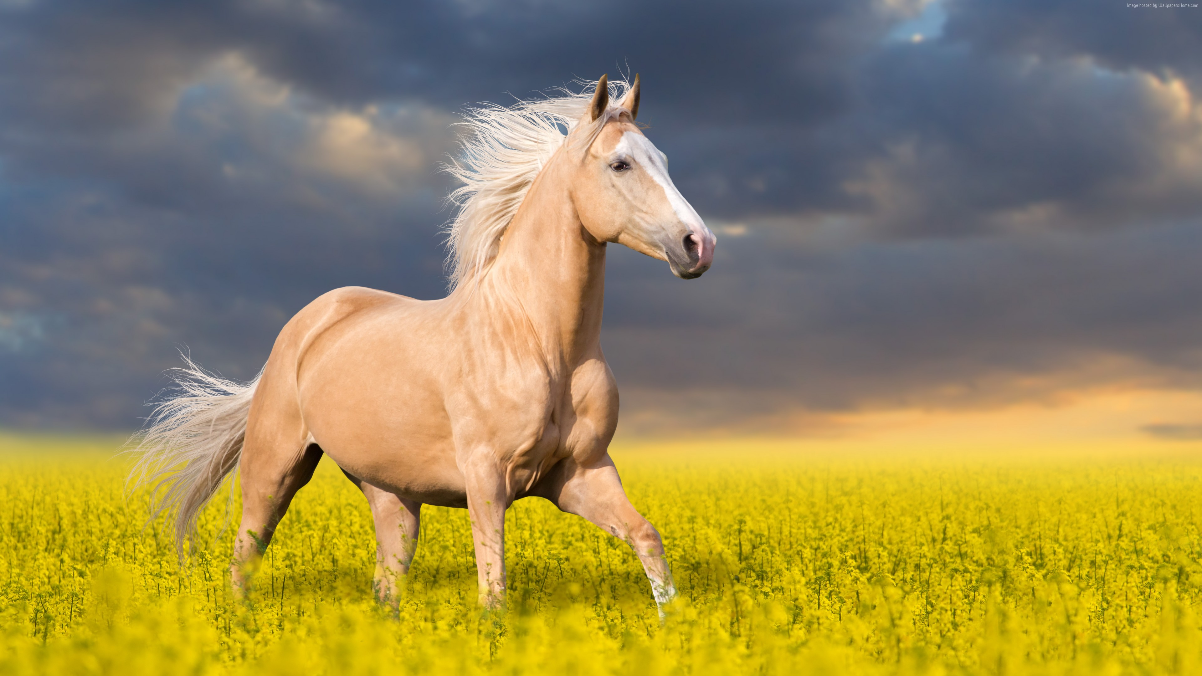 Stock Images Horse, cute animals, 5k, Stock Images