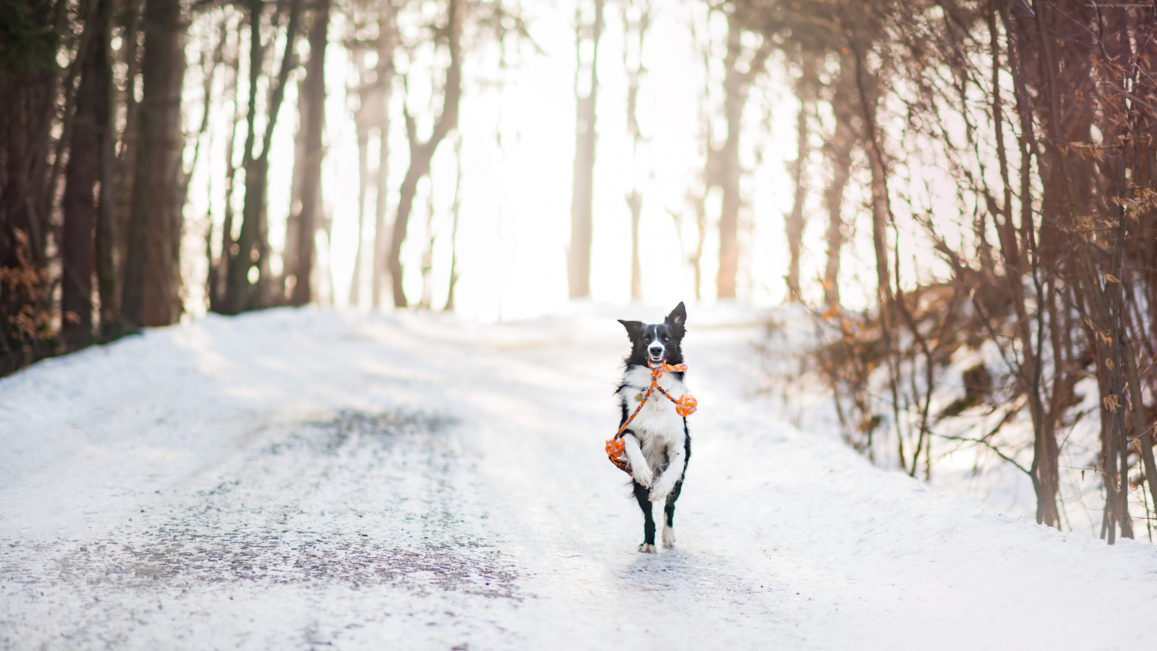 Stock Images dog, cute animals, winter, snow, trees, 4k, Stock Images