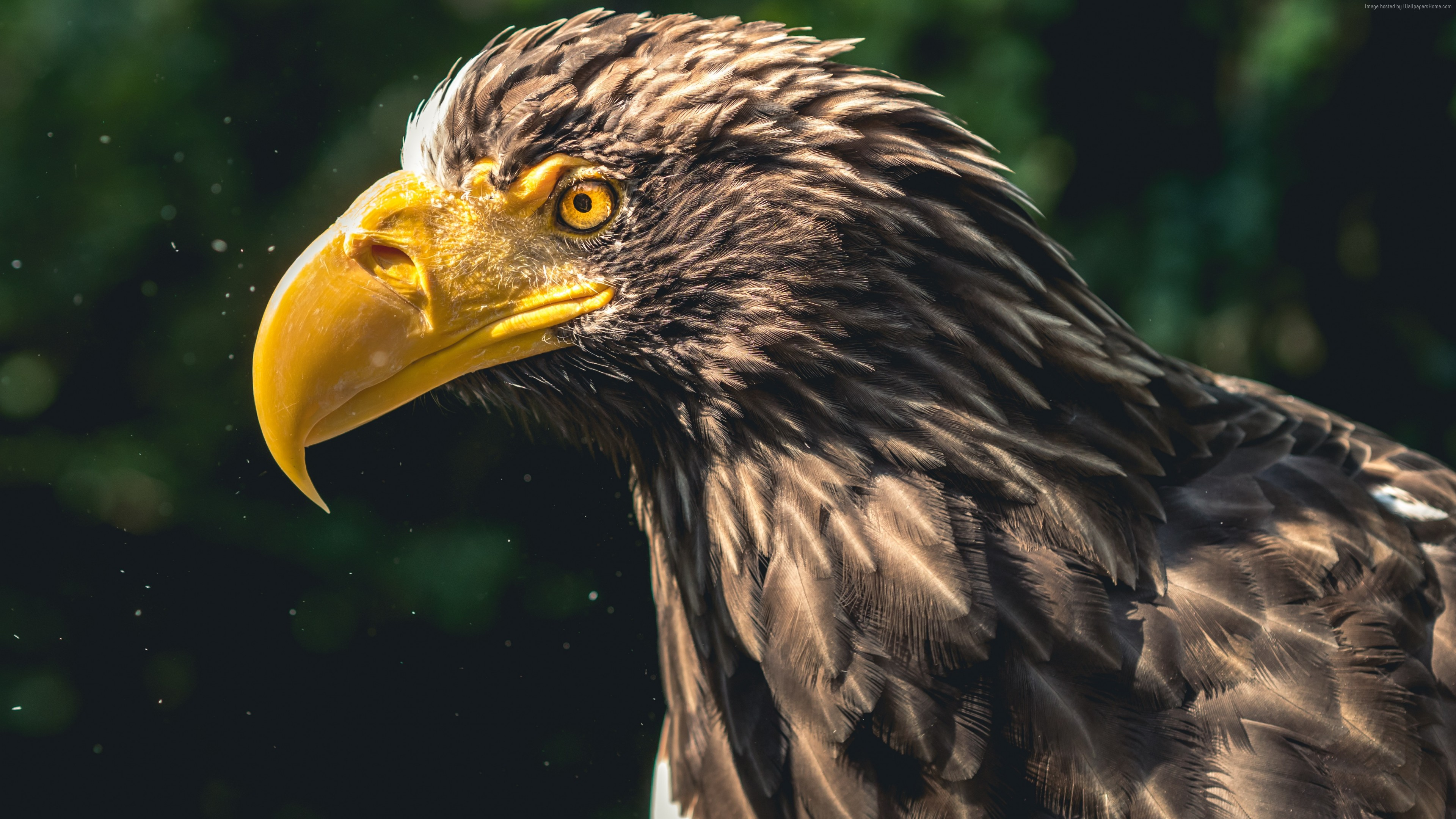 Stock Images Eagle Bird 4k Stock Images Wallpaper Download High Resolution 4k Wallpaper