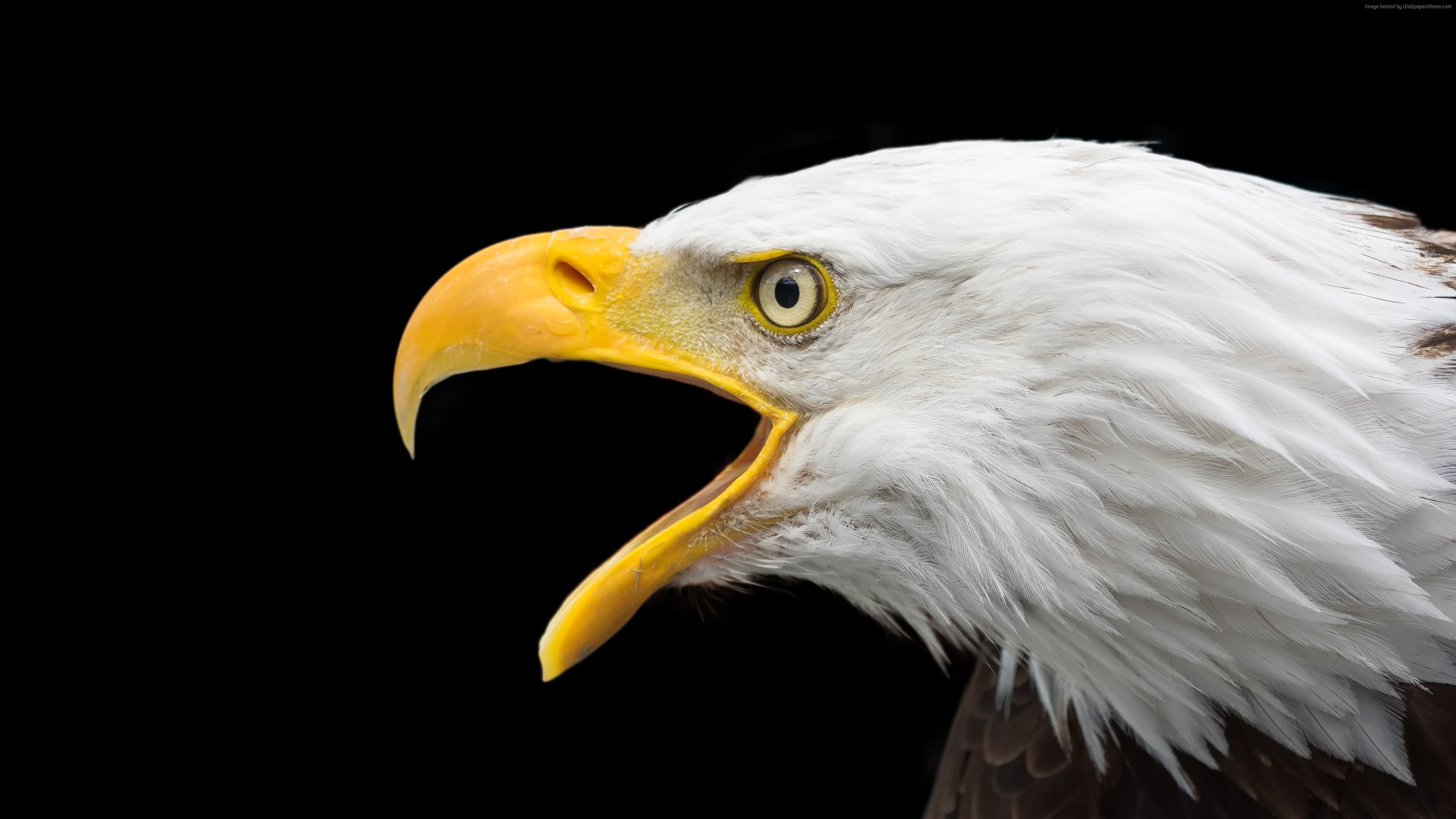 Stock Images Eagle Bird 4k Stock Images Wallpaper