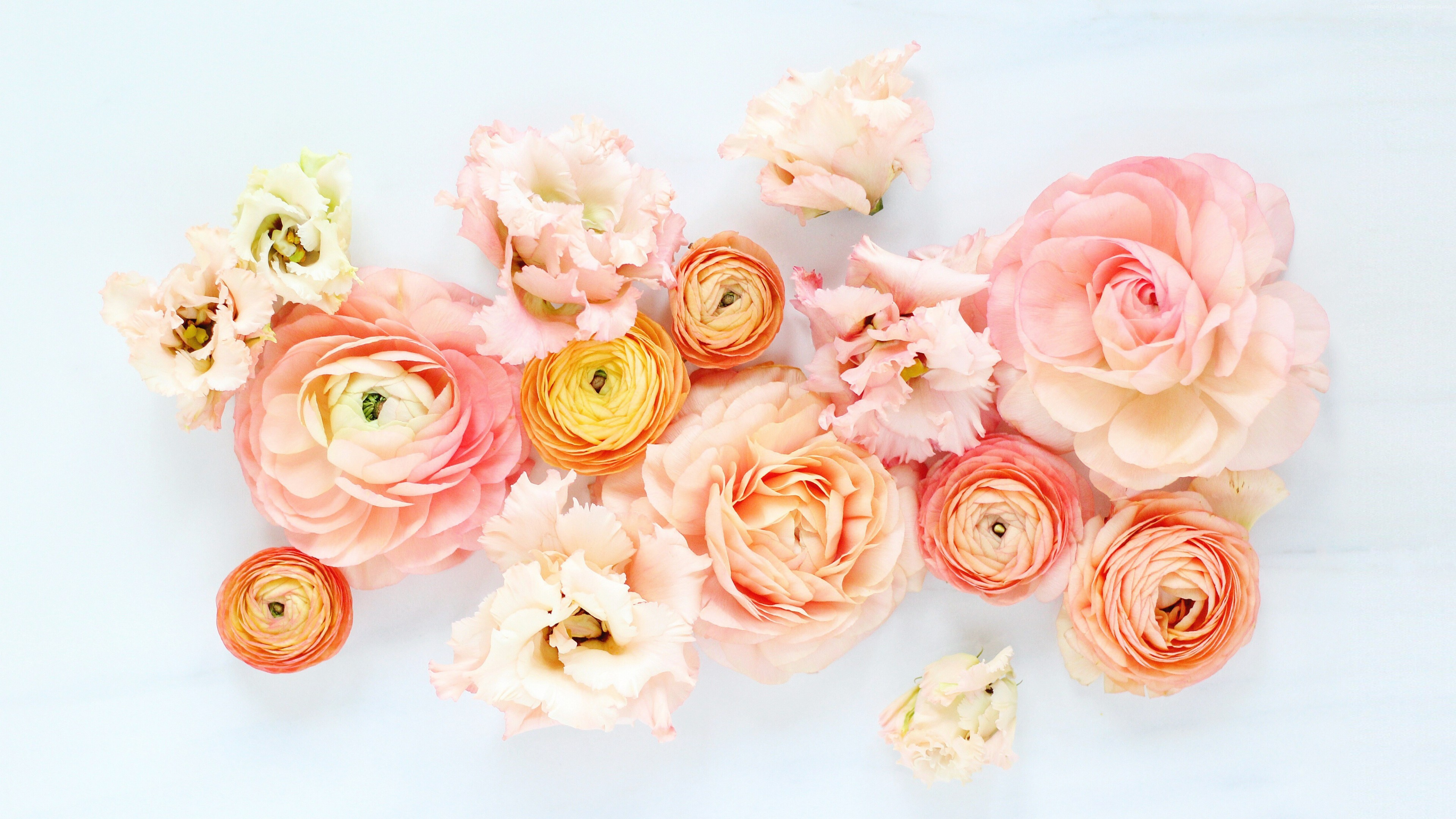 Stock Images flowers, 5k, Stock Images