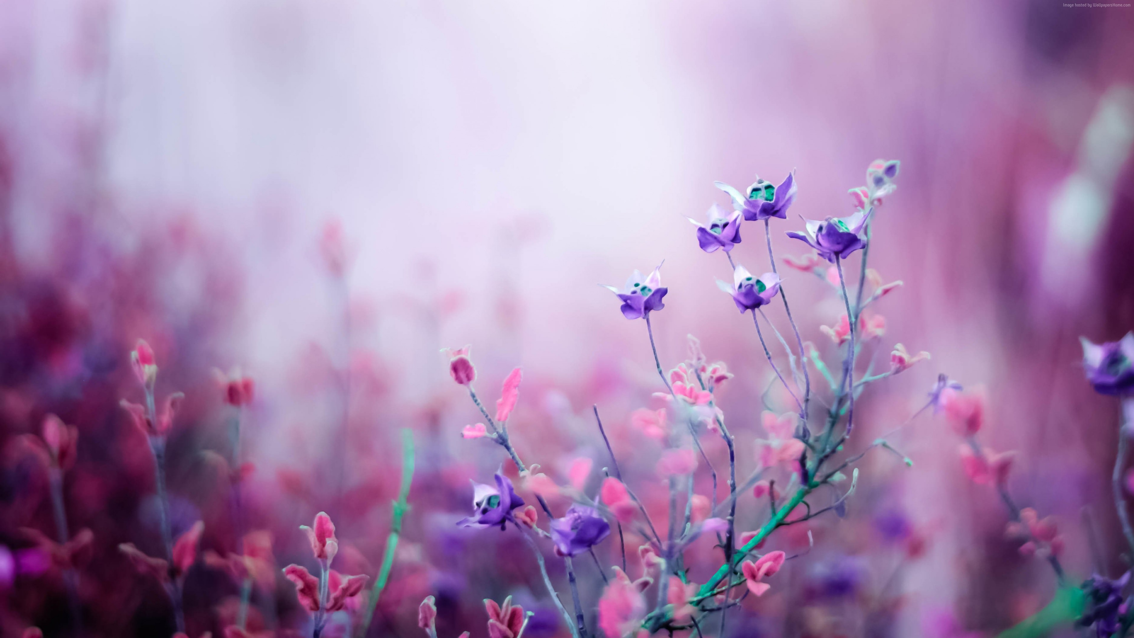 Stock Images flowers, purple, 4k, Stock Images