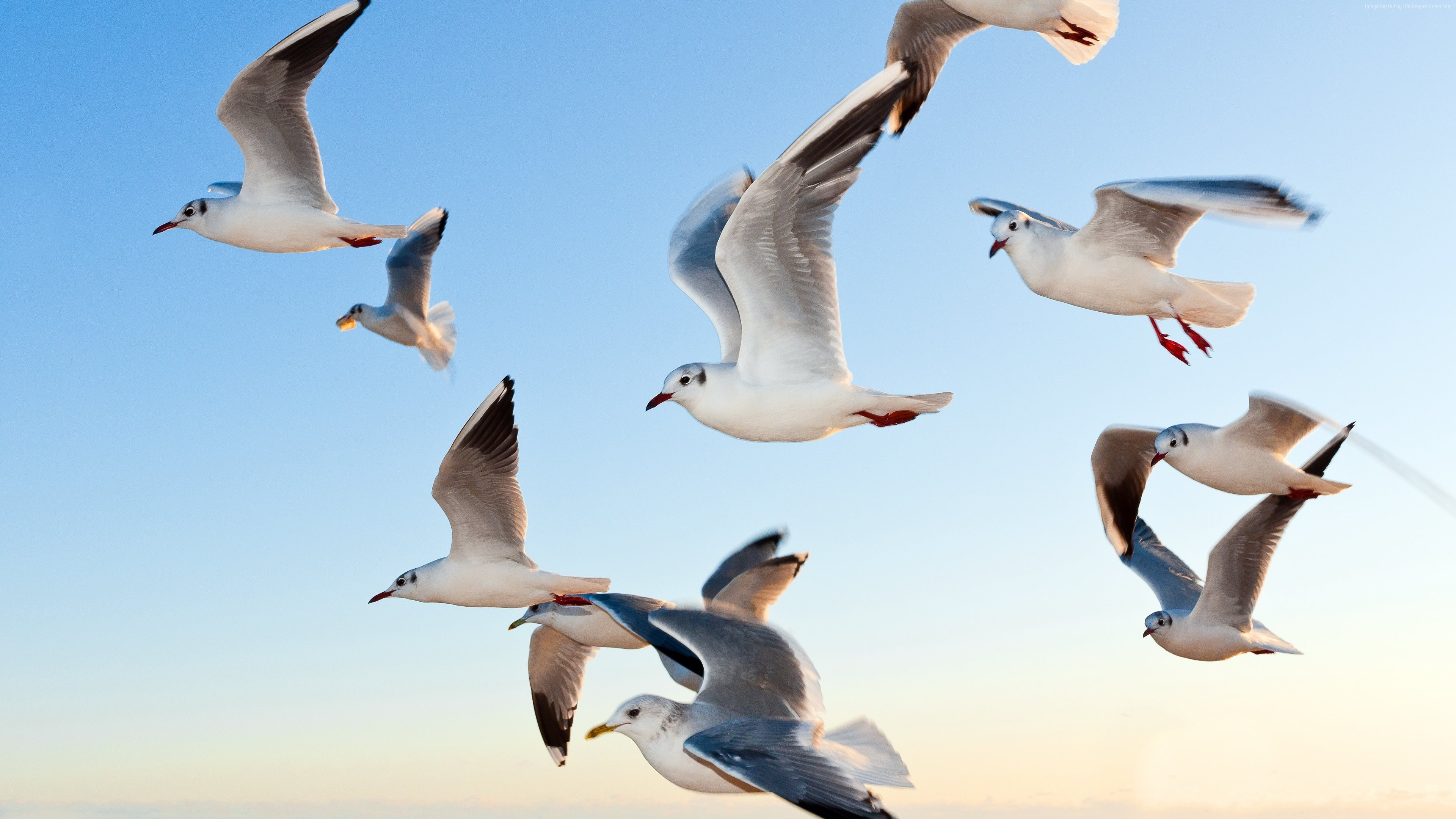 Stock Images gull, sky, seagulls, Stock Images