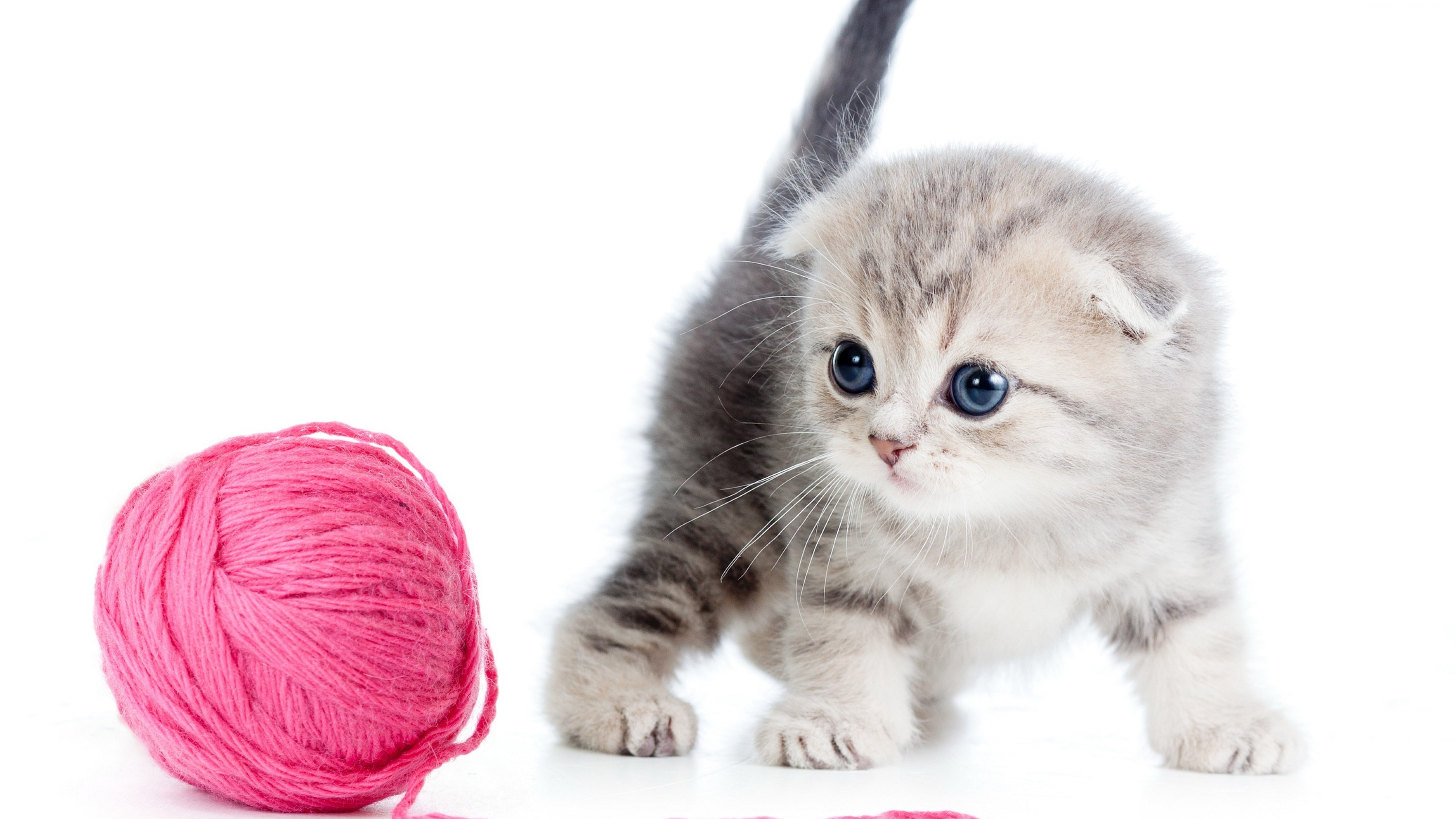 Stock Images kitten, cat, cute, 4k, Stock Images