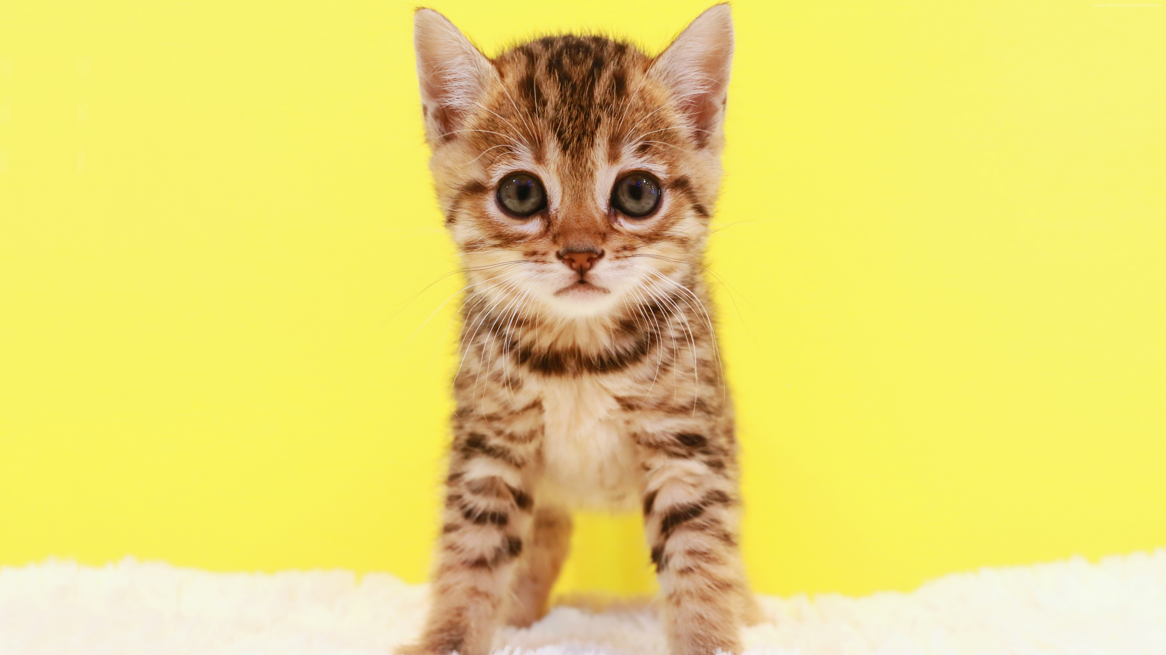 Stock Images kitten, cat, cute, 5k, Stock Images