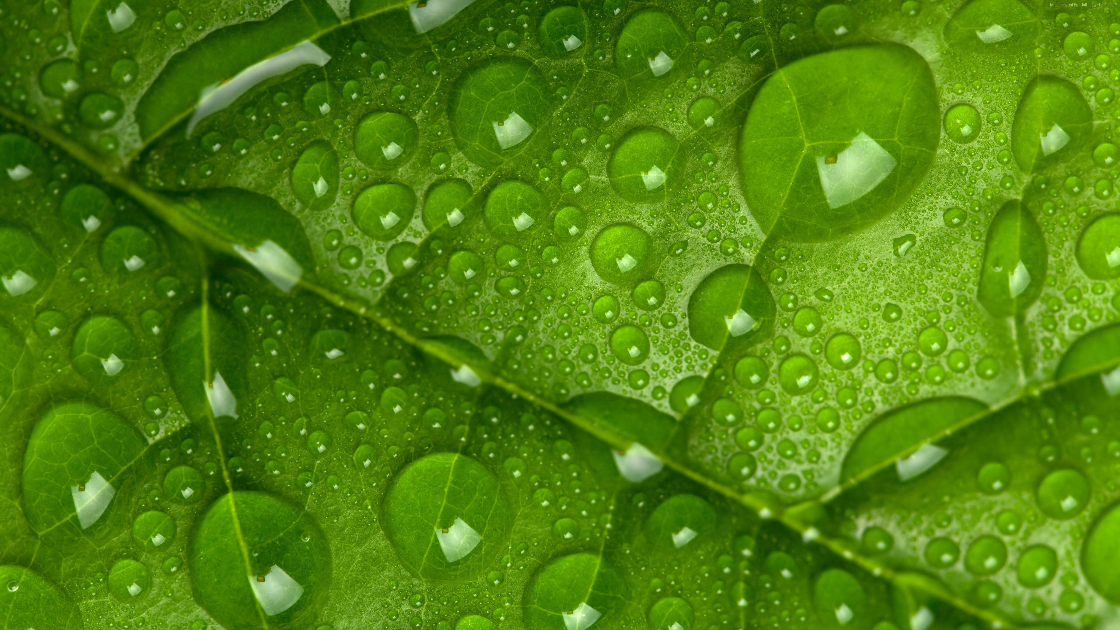 Stock Images leaf, drops, green, 4k, Stock Images
