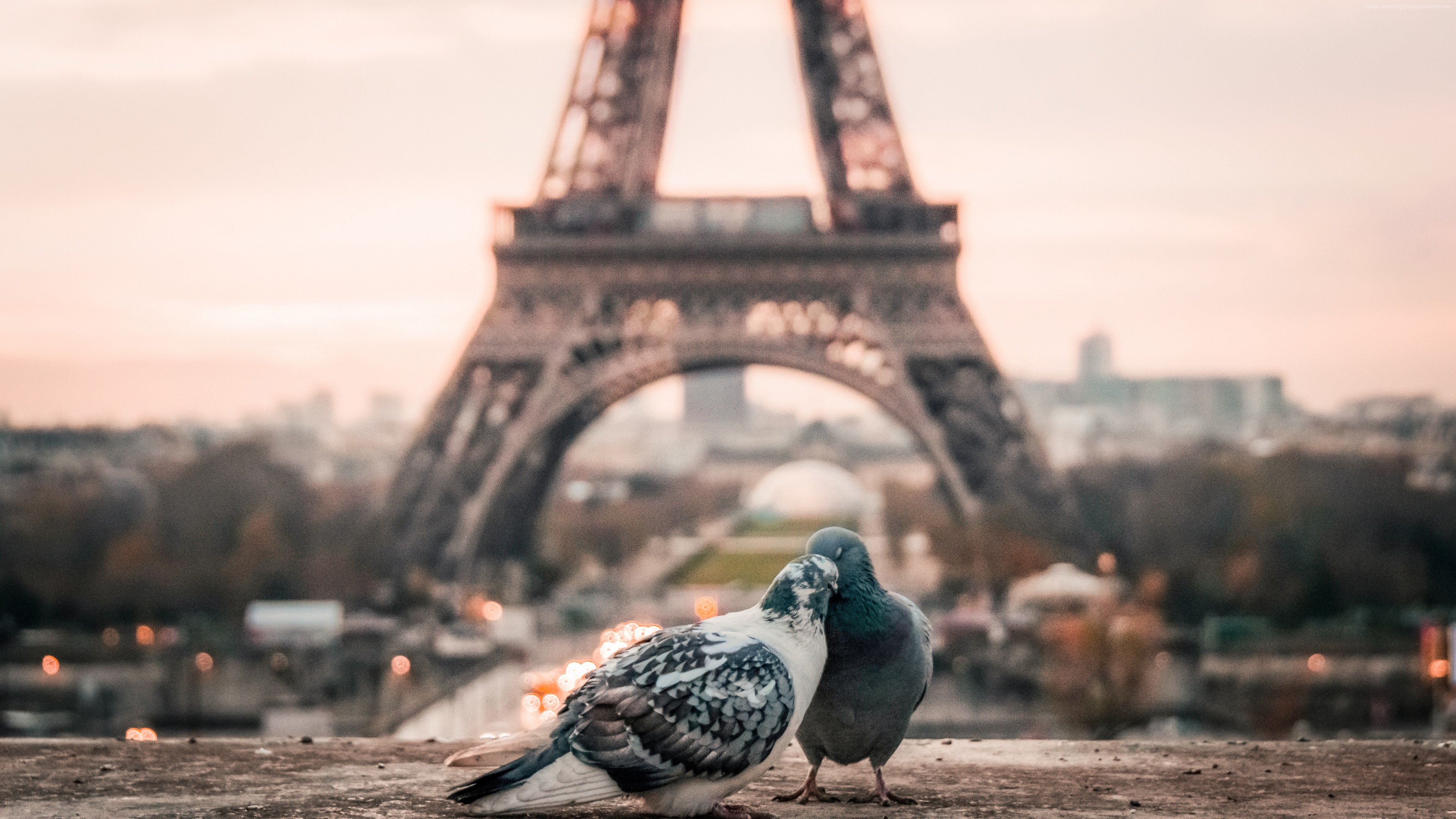 Stock Images Love Image Doves 4k Paris Stock Images Wallpaper Download High Resolution 4k Wallpaper