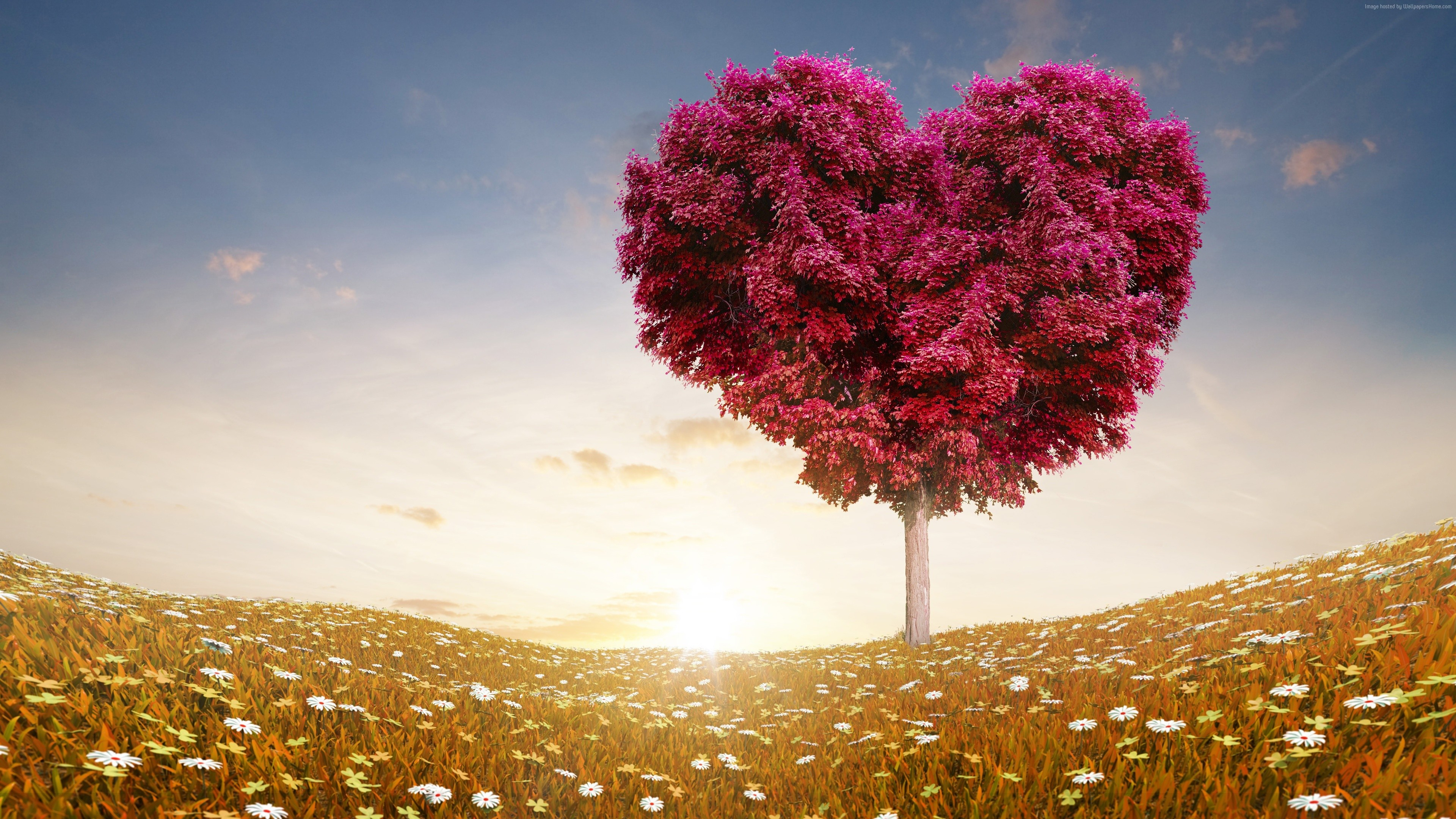 Stock Images love image, heart, 4k, tree, Stock Images