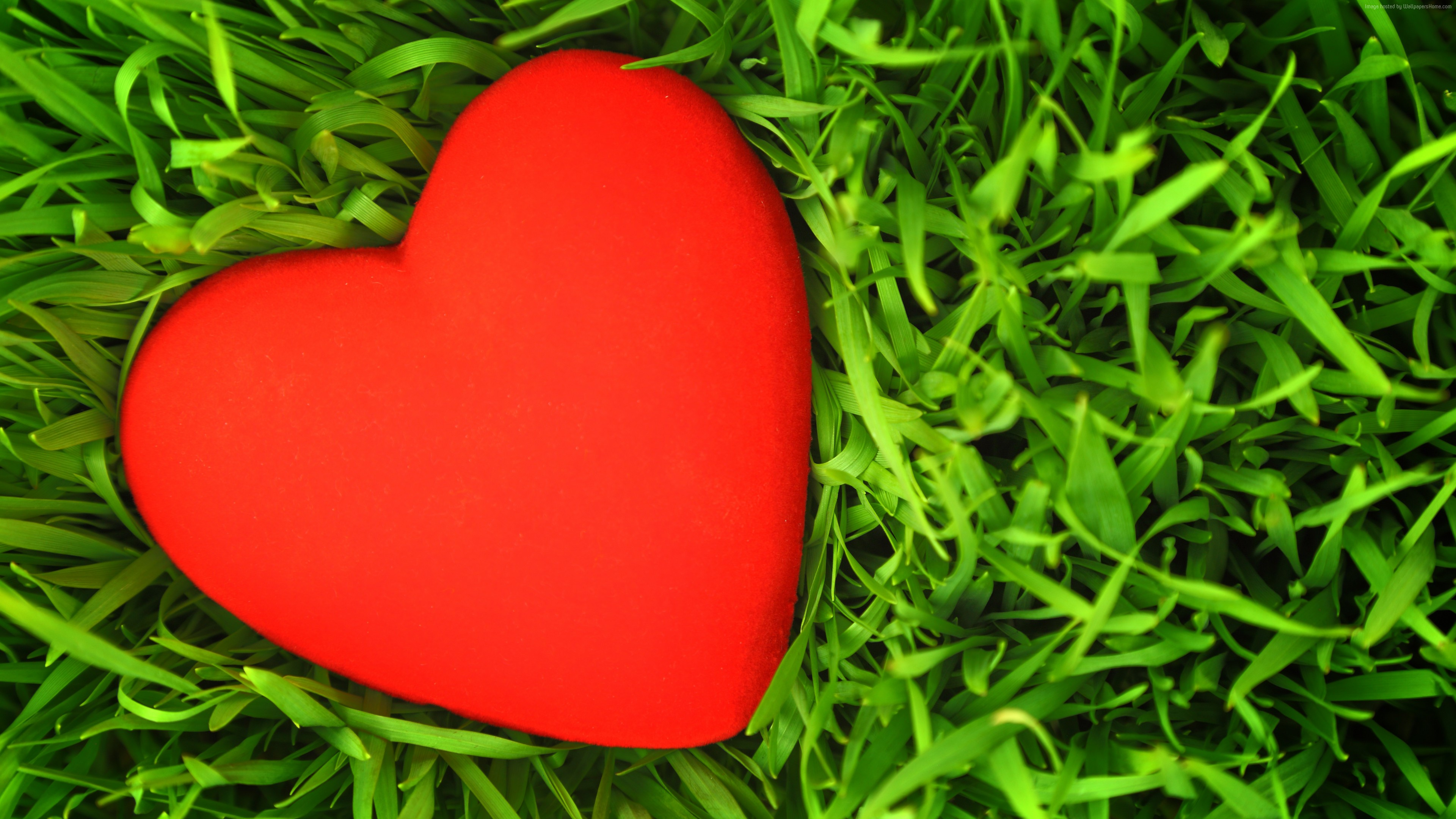 Stock Images love image, heart, grass, 5k, Stock Images