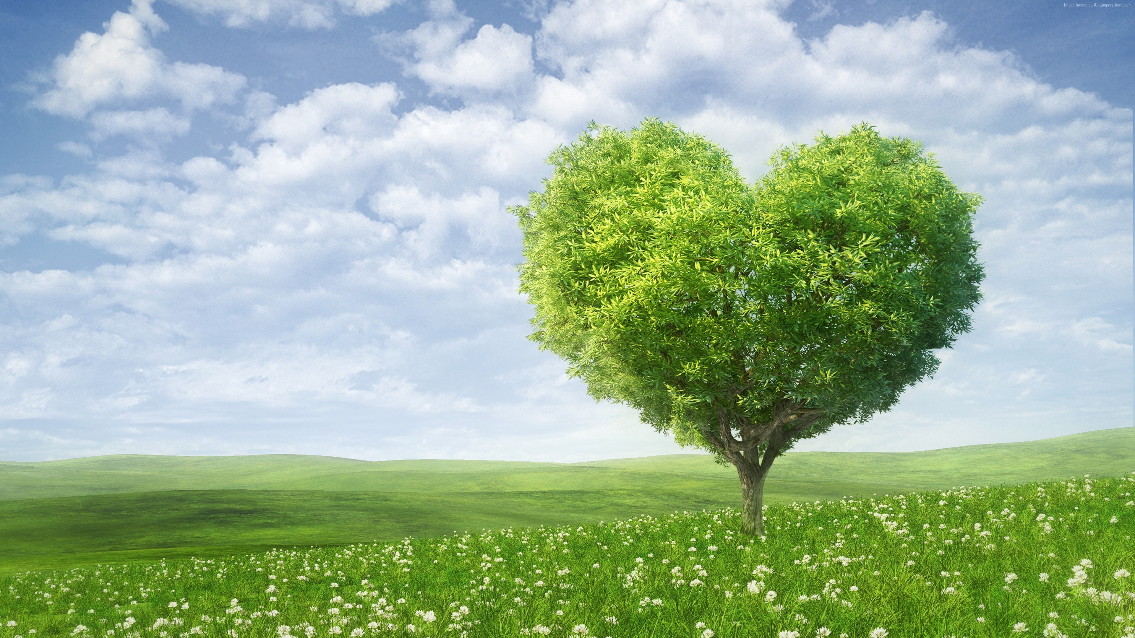 Stock Images love image, heart, tree, 5k, Stock Images