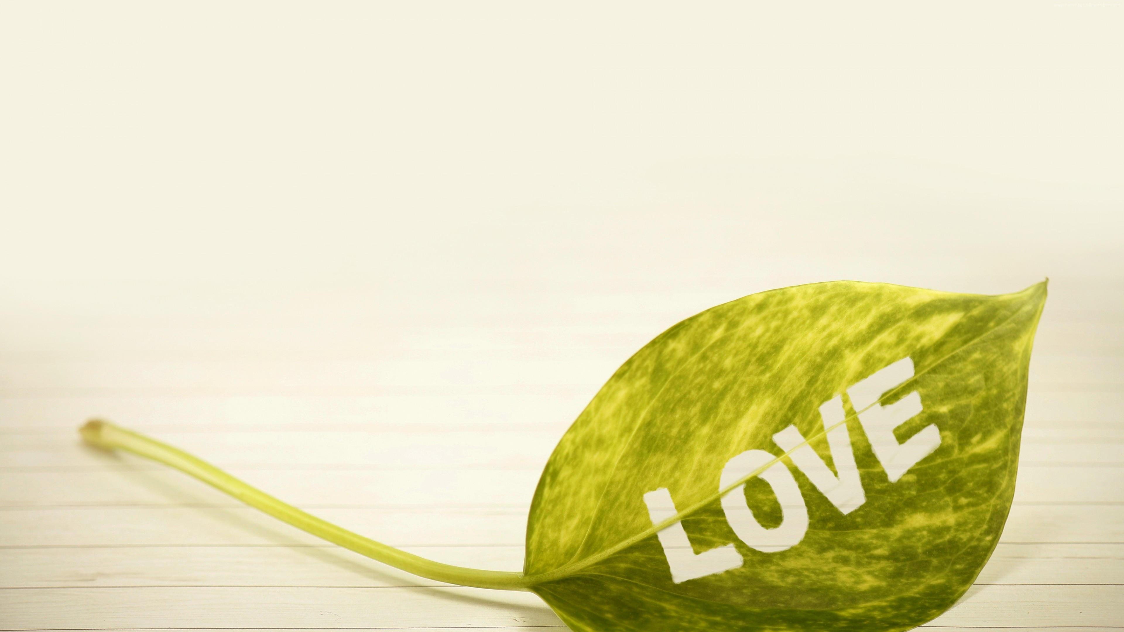 Stock Images love image, leaf, 4k, Stock Images