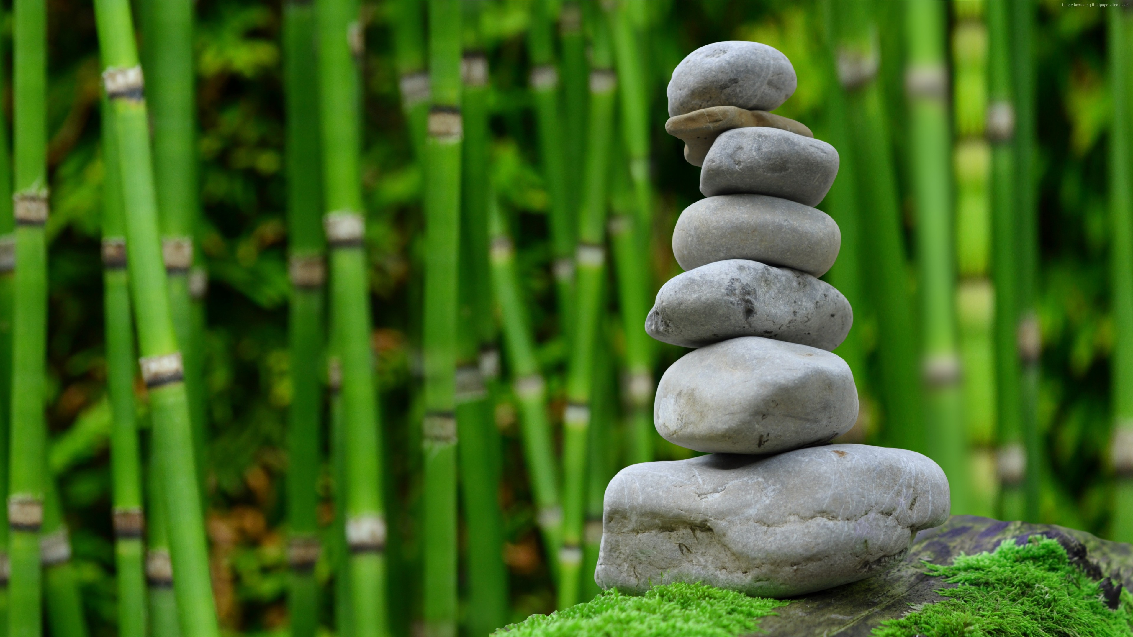 Stock Images stones, bamboo, green, 4k, Stock Images