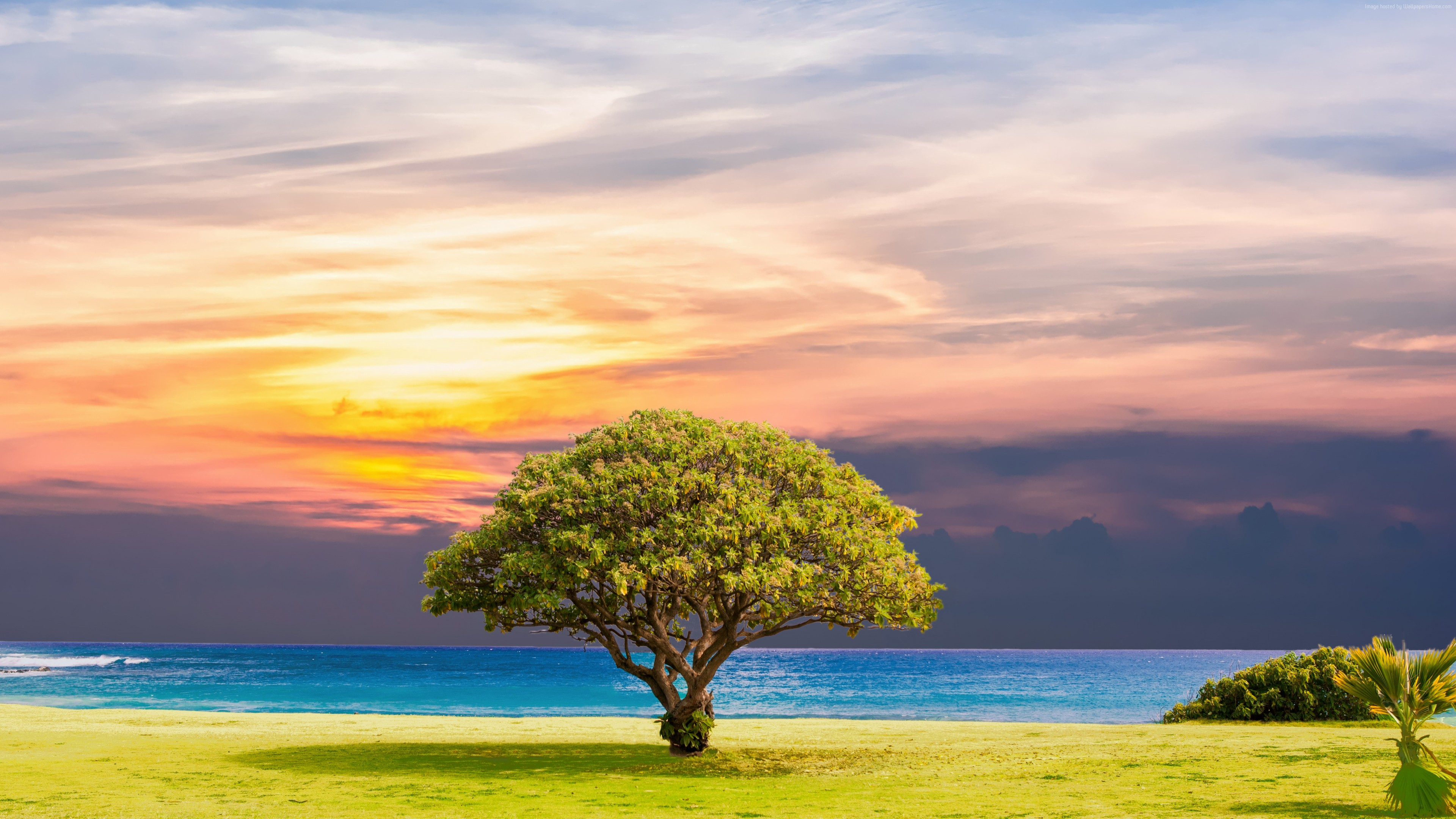 Stock Images tree, nature, ocean, landscape, 5k, Stock Images