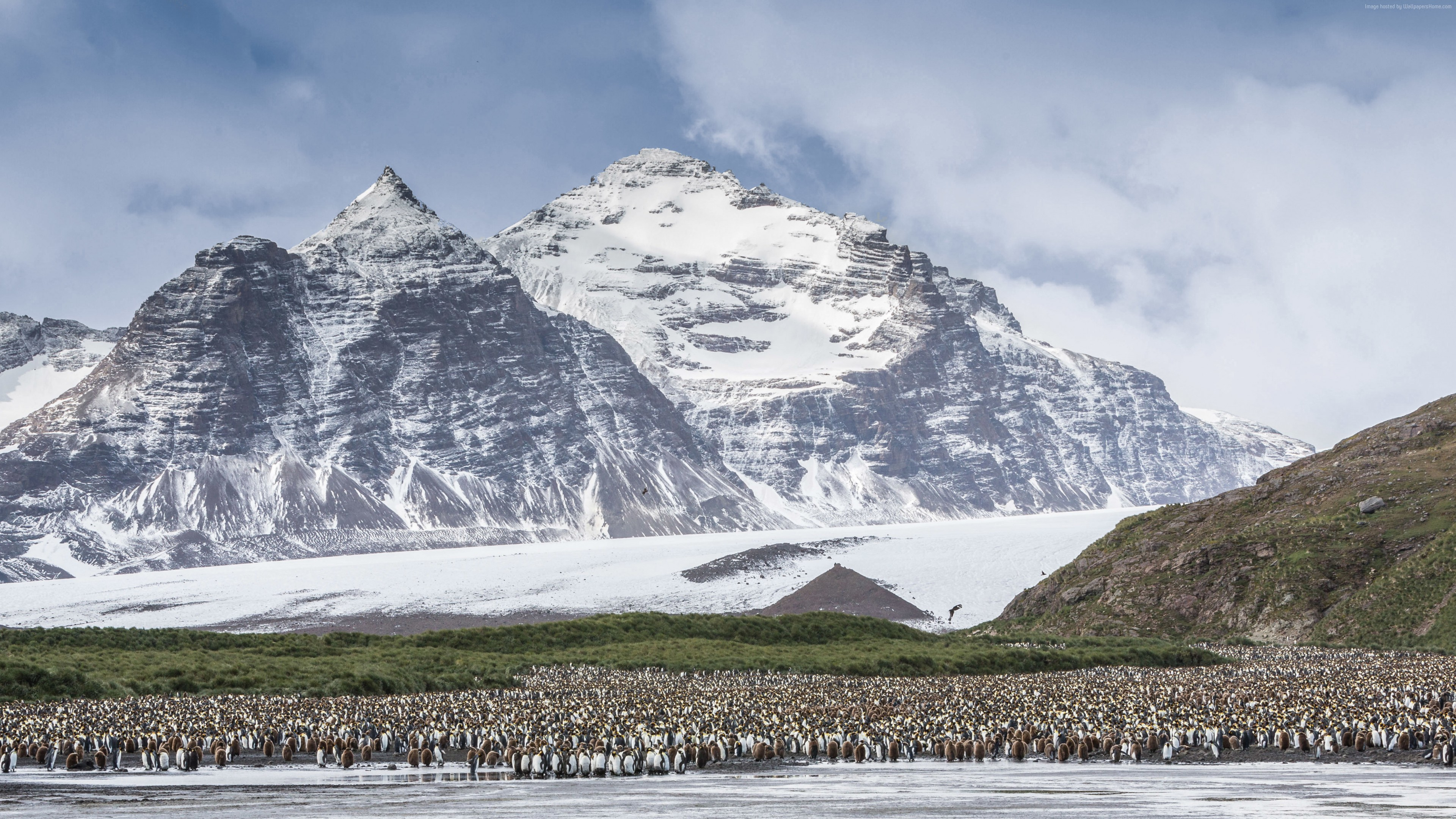 Wallpaper Antarctica, mountains, penguins, 5k, Travel