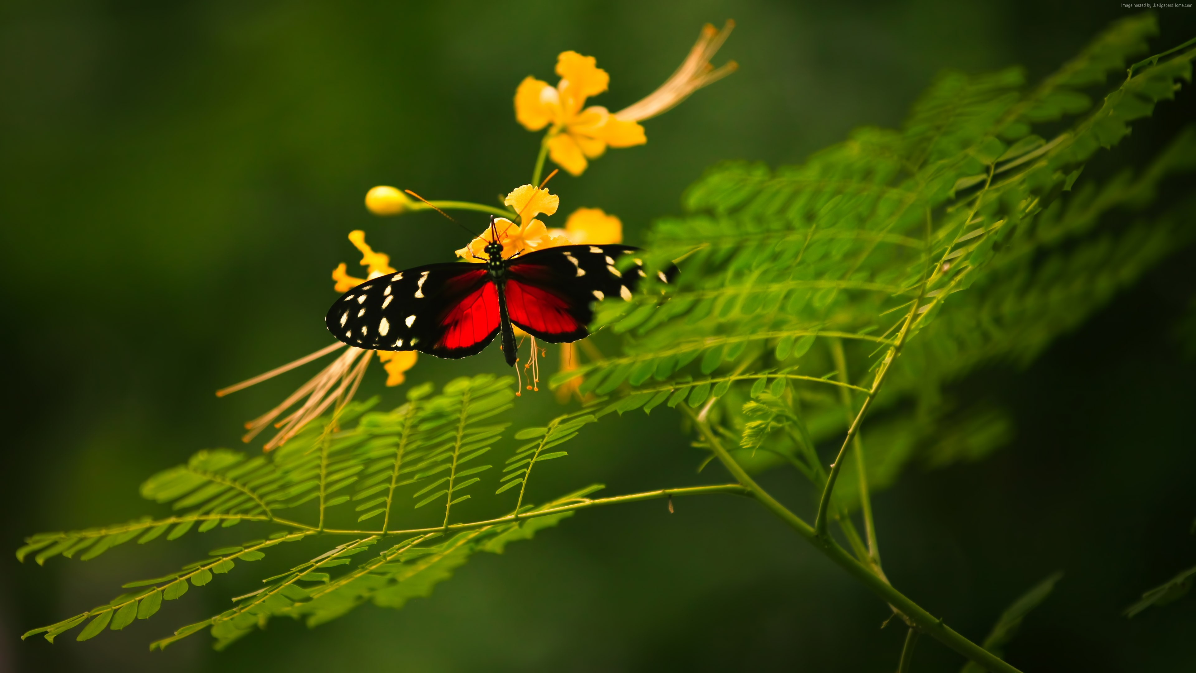 Wallpaper Beautiful Butterfly, red wings, green background, wild nature, yellow flowers, insects, Animals