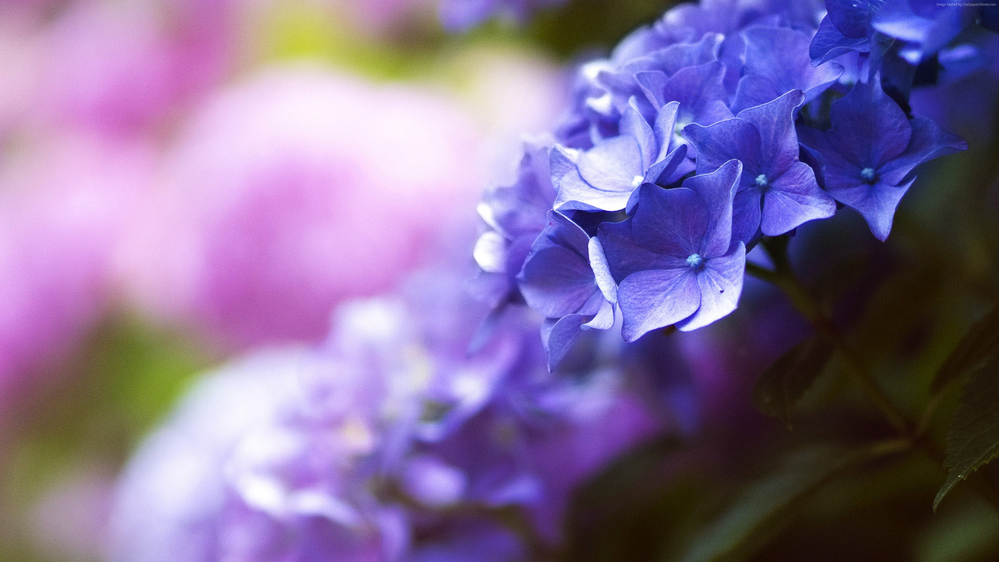 Wallpaper Beautiful Flowers 5k 4k Wallpaper Blue Spring Macro Nature Wallpaper Download High Resolution 4k Wallpaper