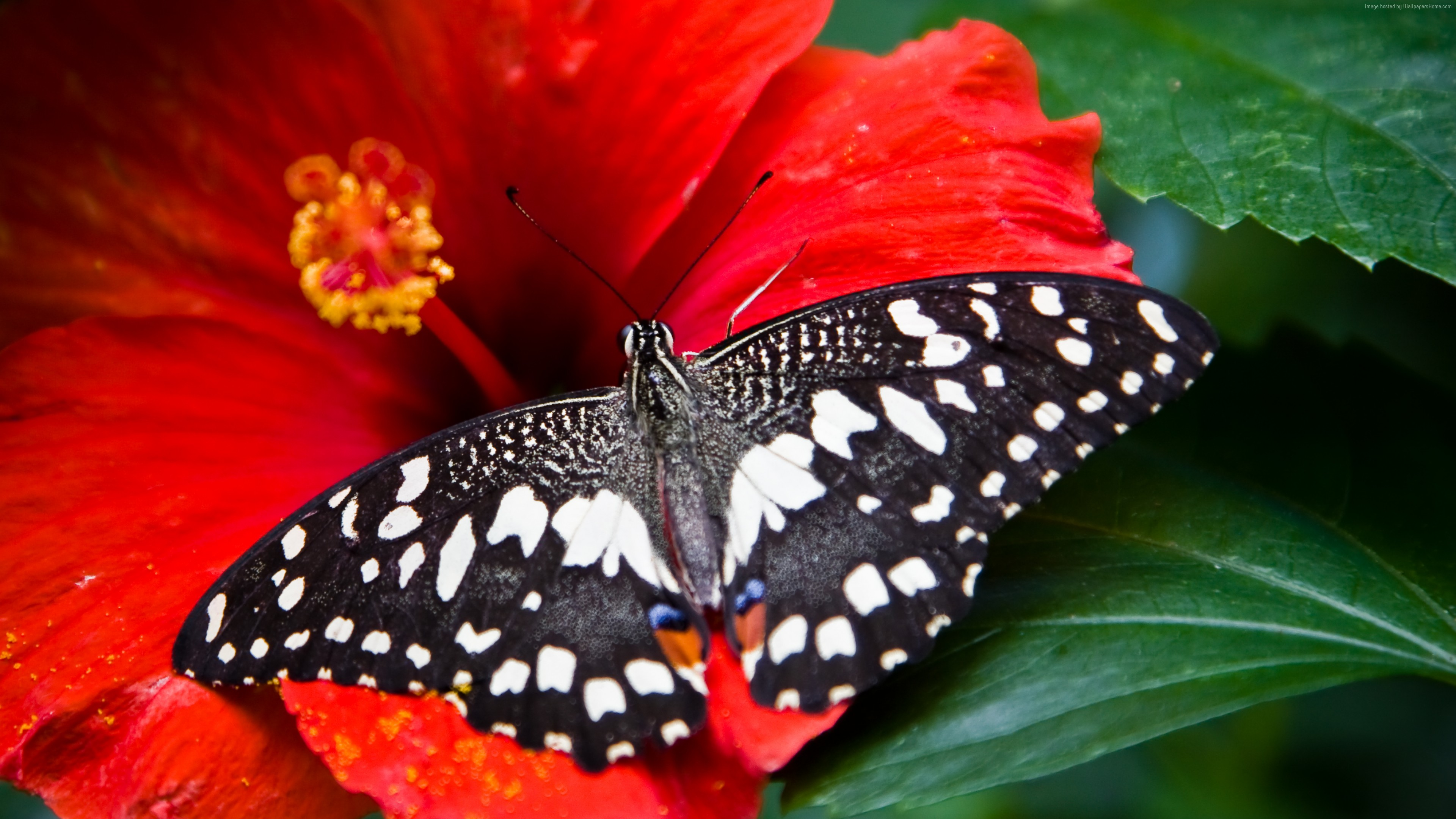Wallpaper Butterfly, black-white, insects, flowers, Glass, nature, garden, Animals
