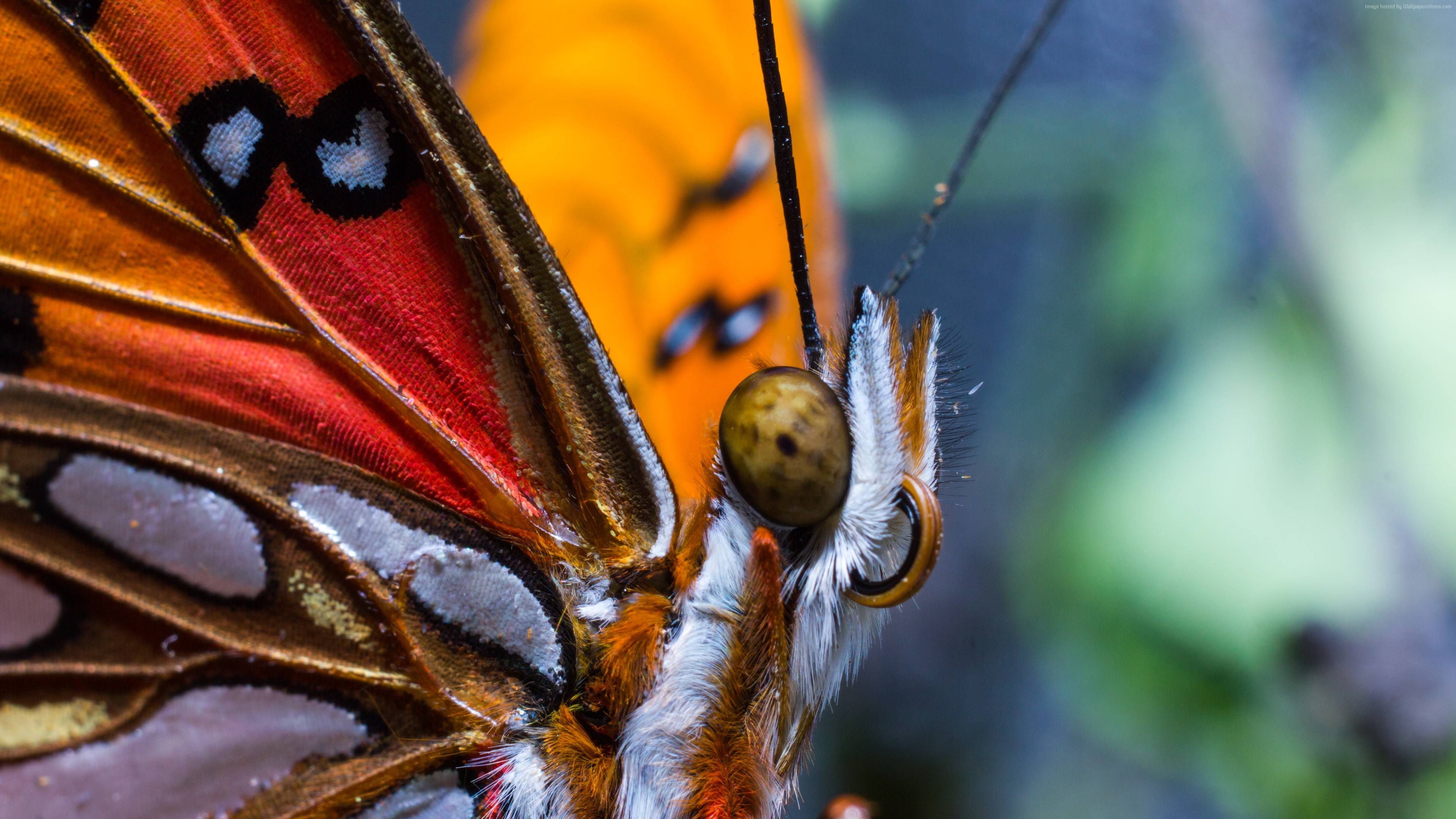 Wallpaper Butterfly, colorful, macro, insects, red, wings, eyes, Animals