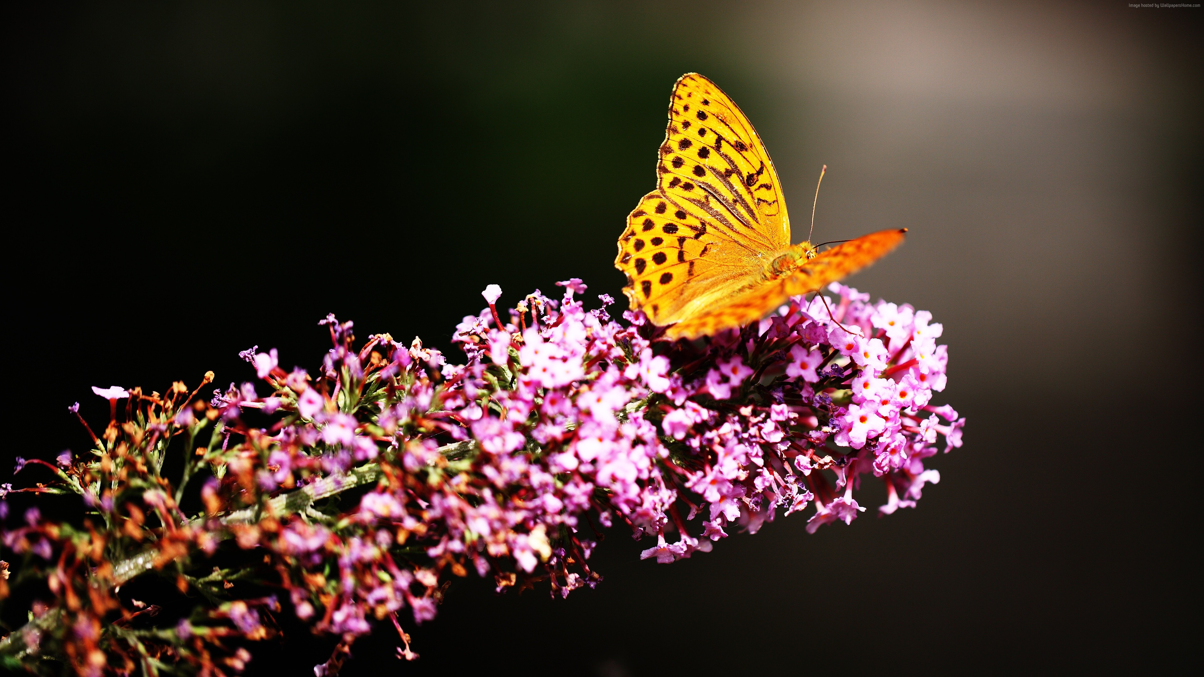 Wallpaper Butterfly, insects, flowers, Glass, nature, garden, Animals