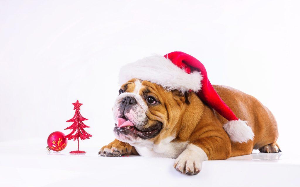 Wallpaper Christmas New Year Dog Cute Animals 4k Download