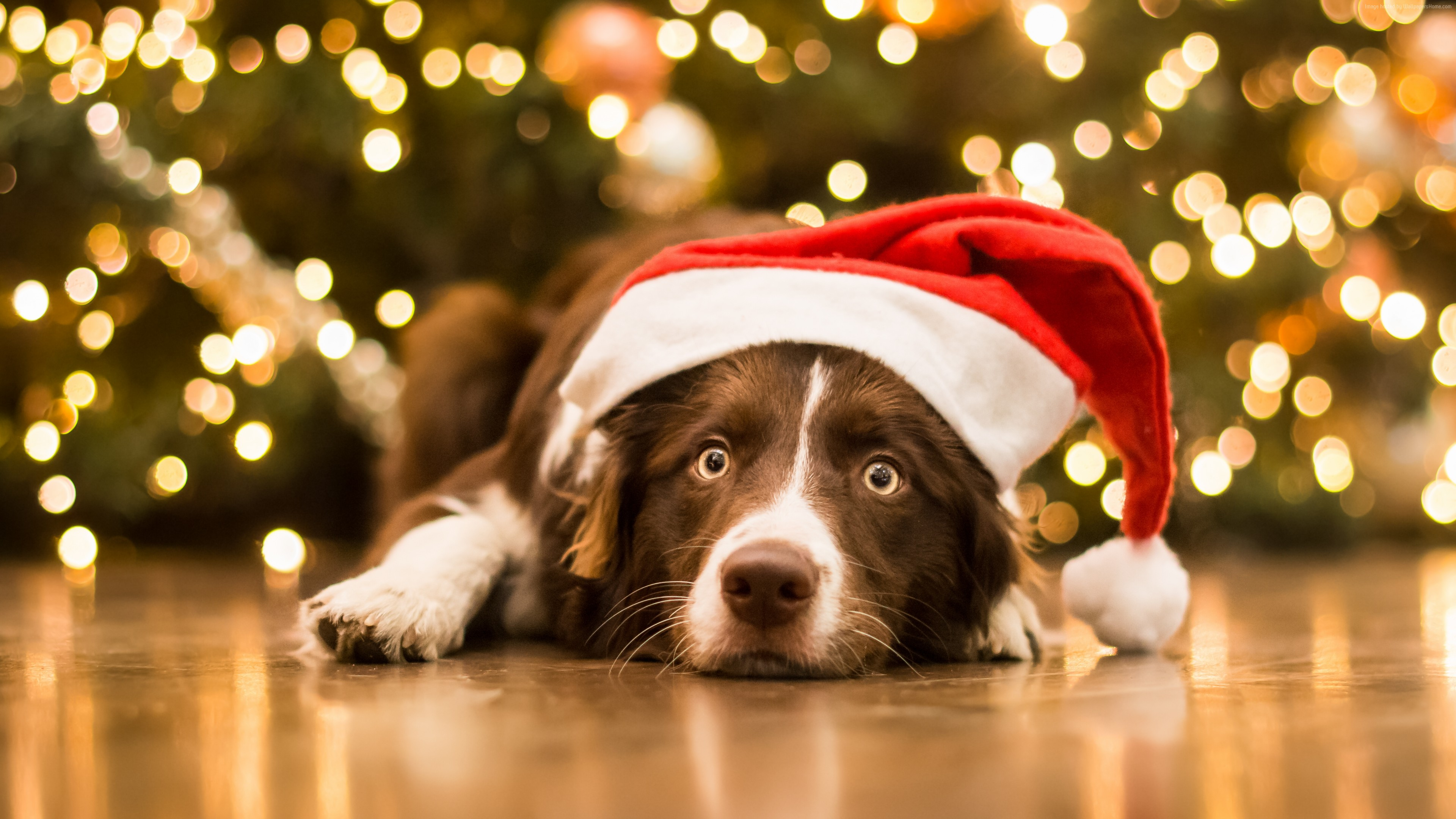 Wallpaper Christmas, New Year, dog, cute animals, 5k, Holidays