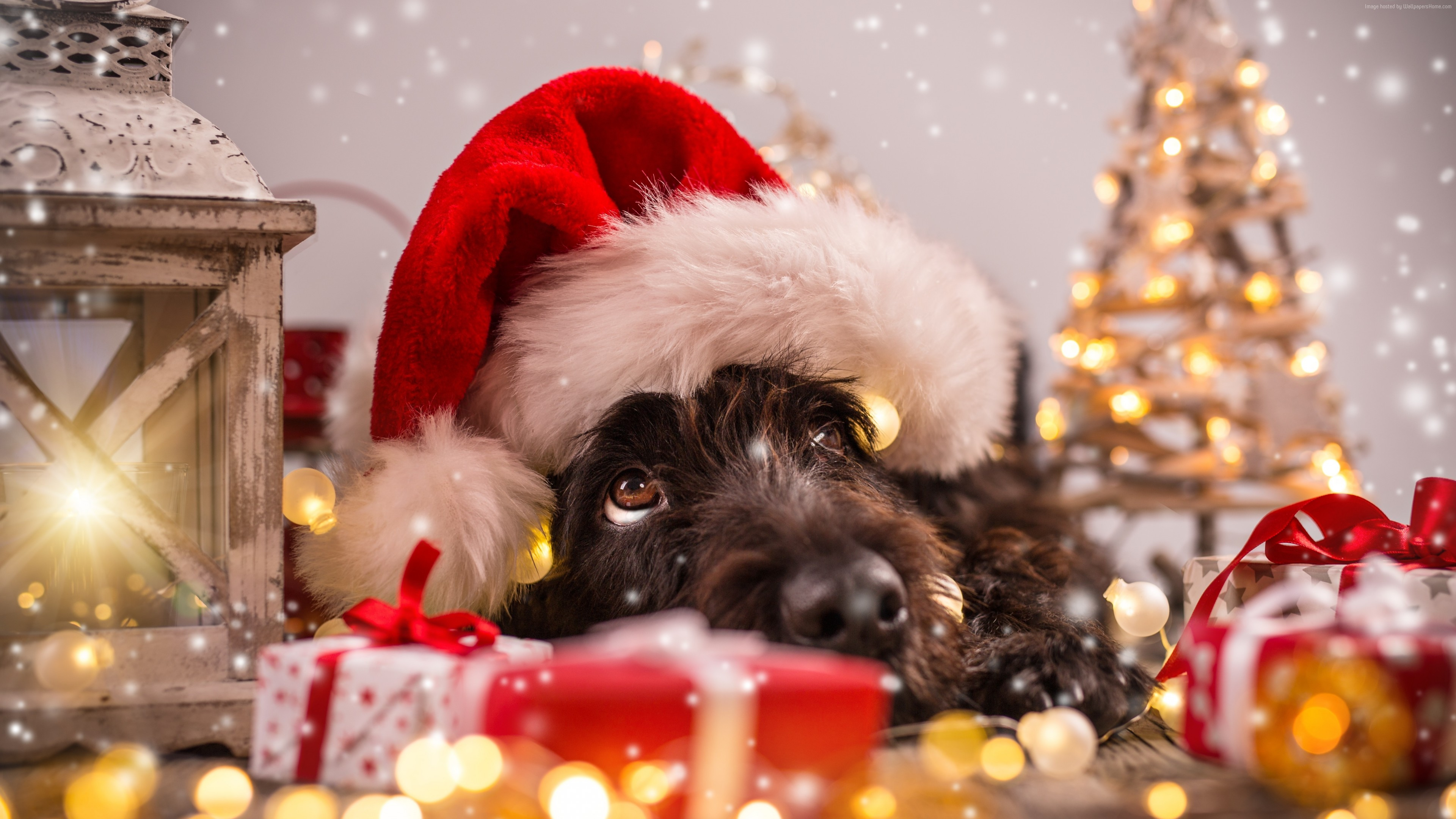 Wallpaper Christmas, New Year, snow, dog, cute animals, 4k, Holidays