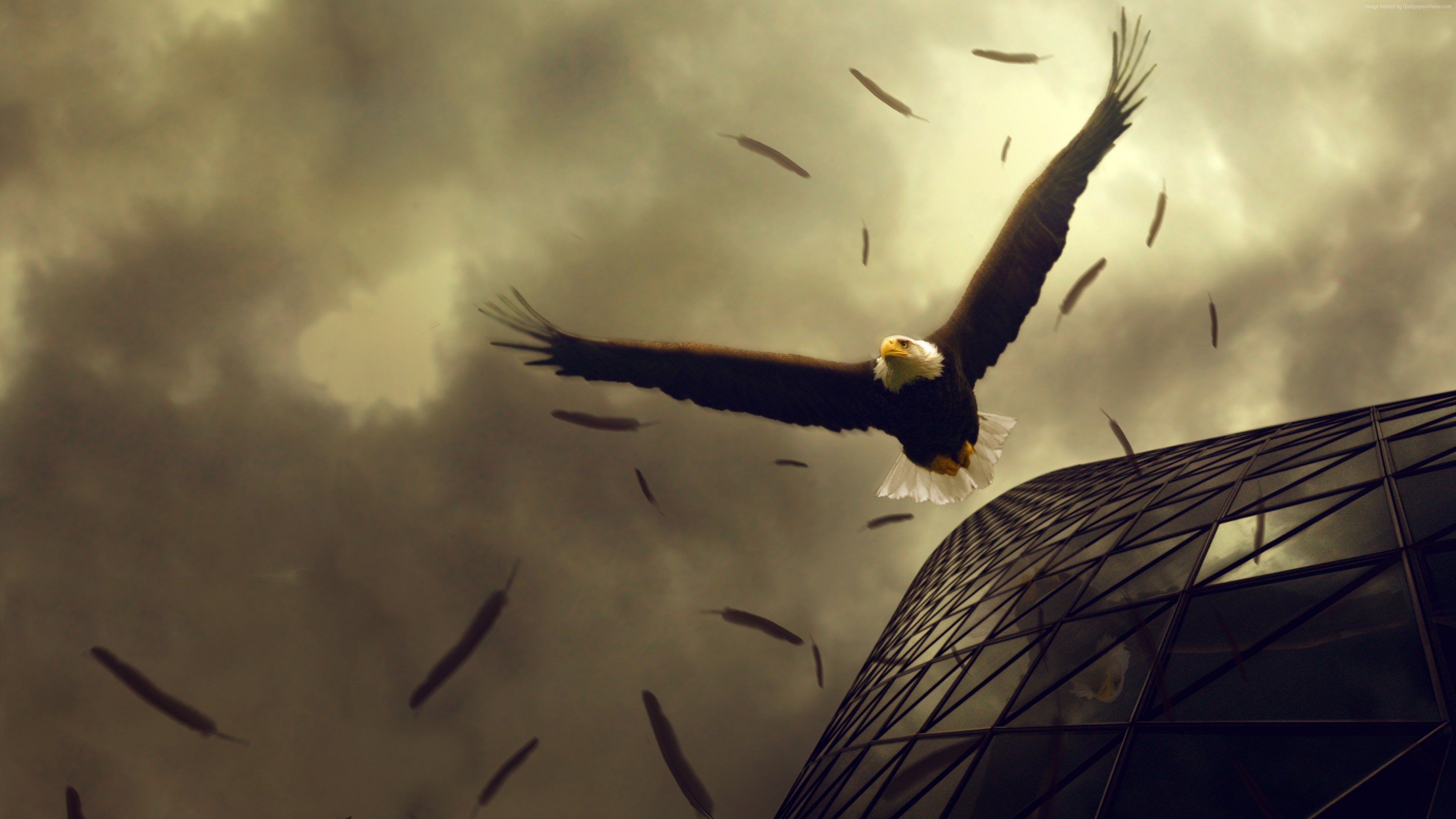 Wallpaper Eagle 4k Hd Wallpaper Sky Clouds Building Fly Wings Plumage Art Animals Wallpaper Download High Resolution 4k Wallpaper