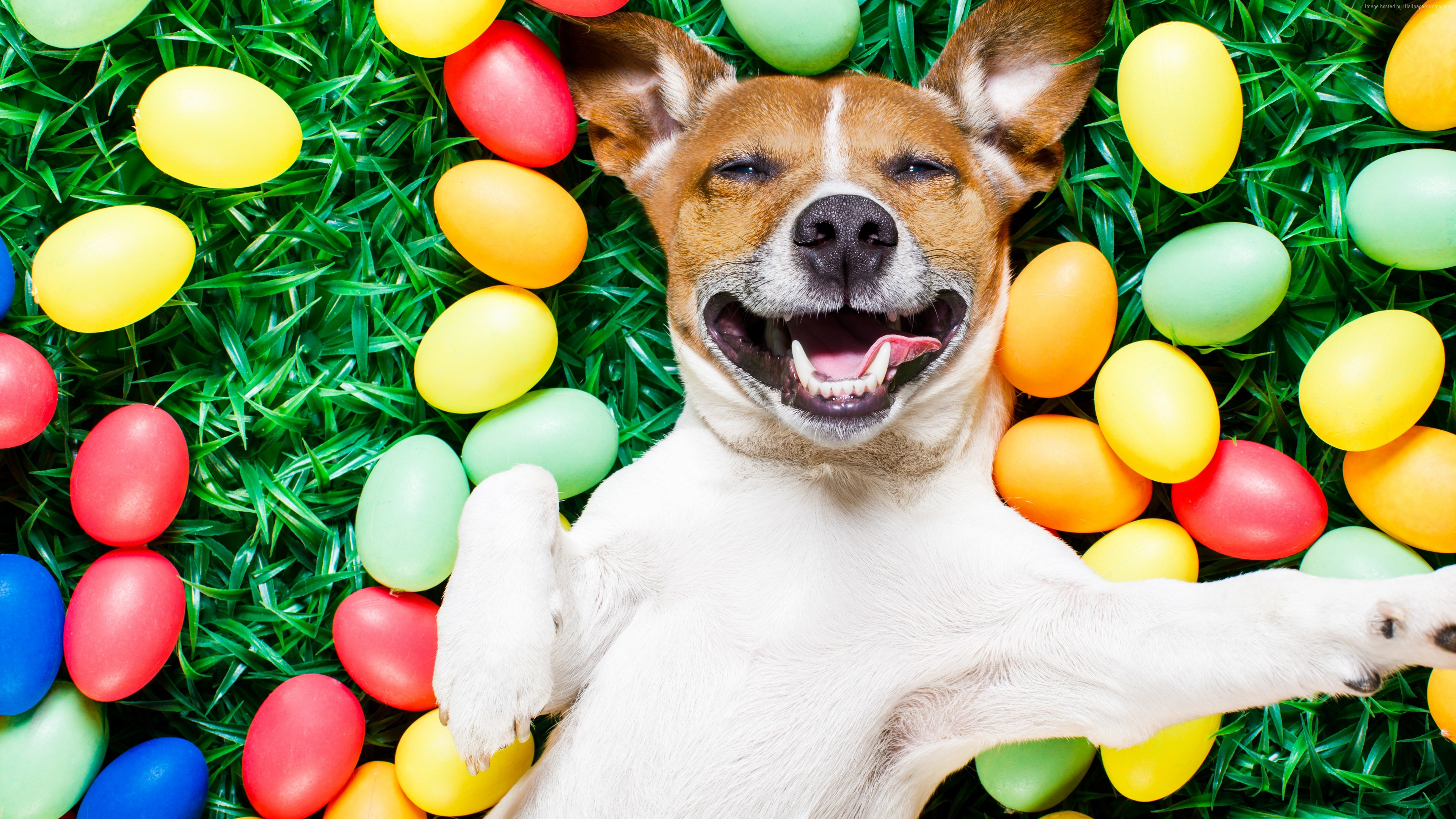 Wallpaper Easter, eggs, dog, 5k, Animals