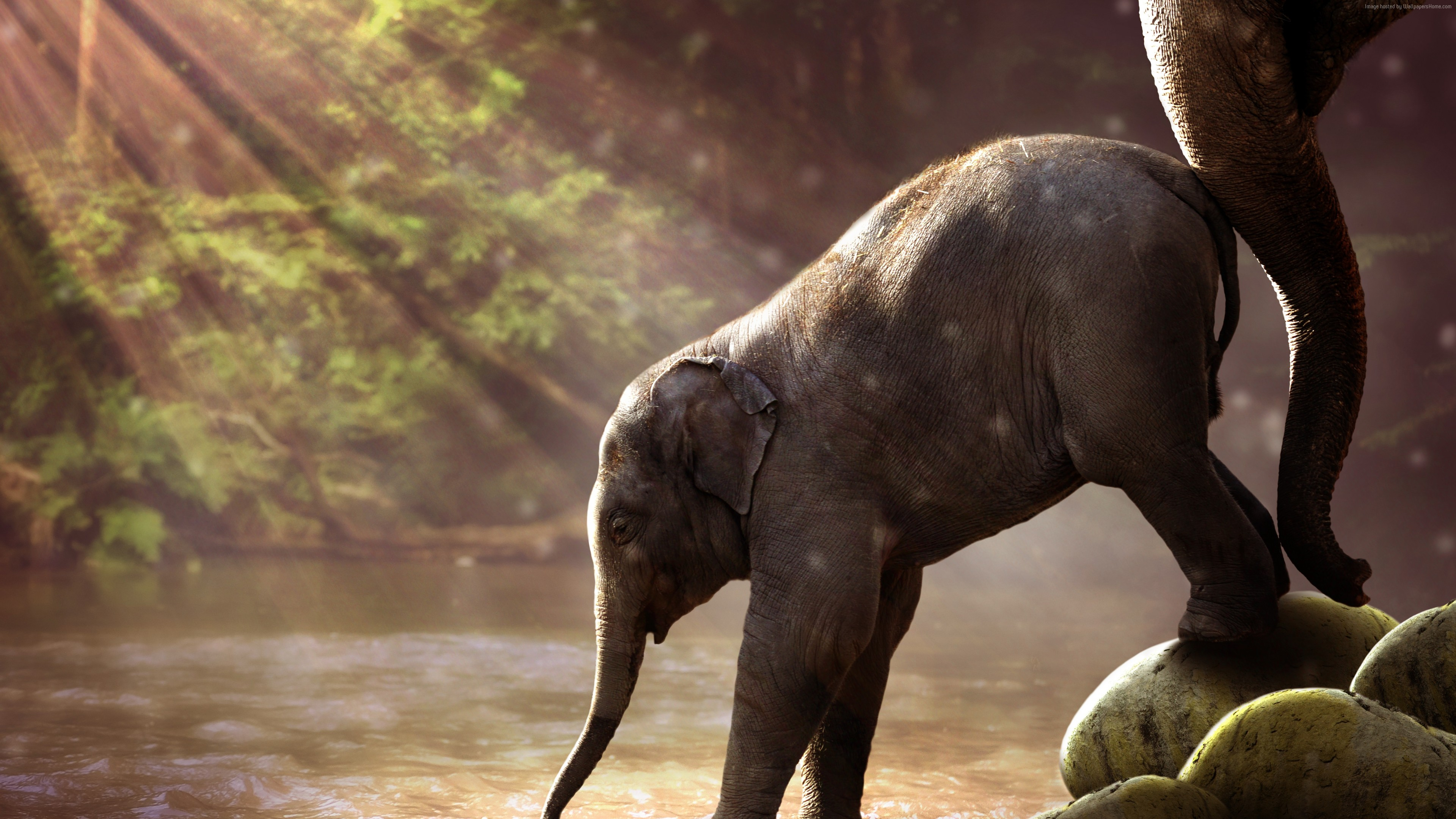 Wallpaper Elephant, funny animals, 7K, Animals