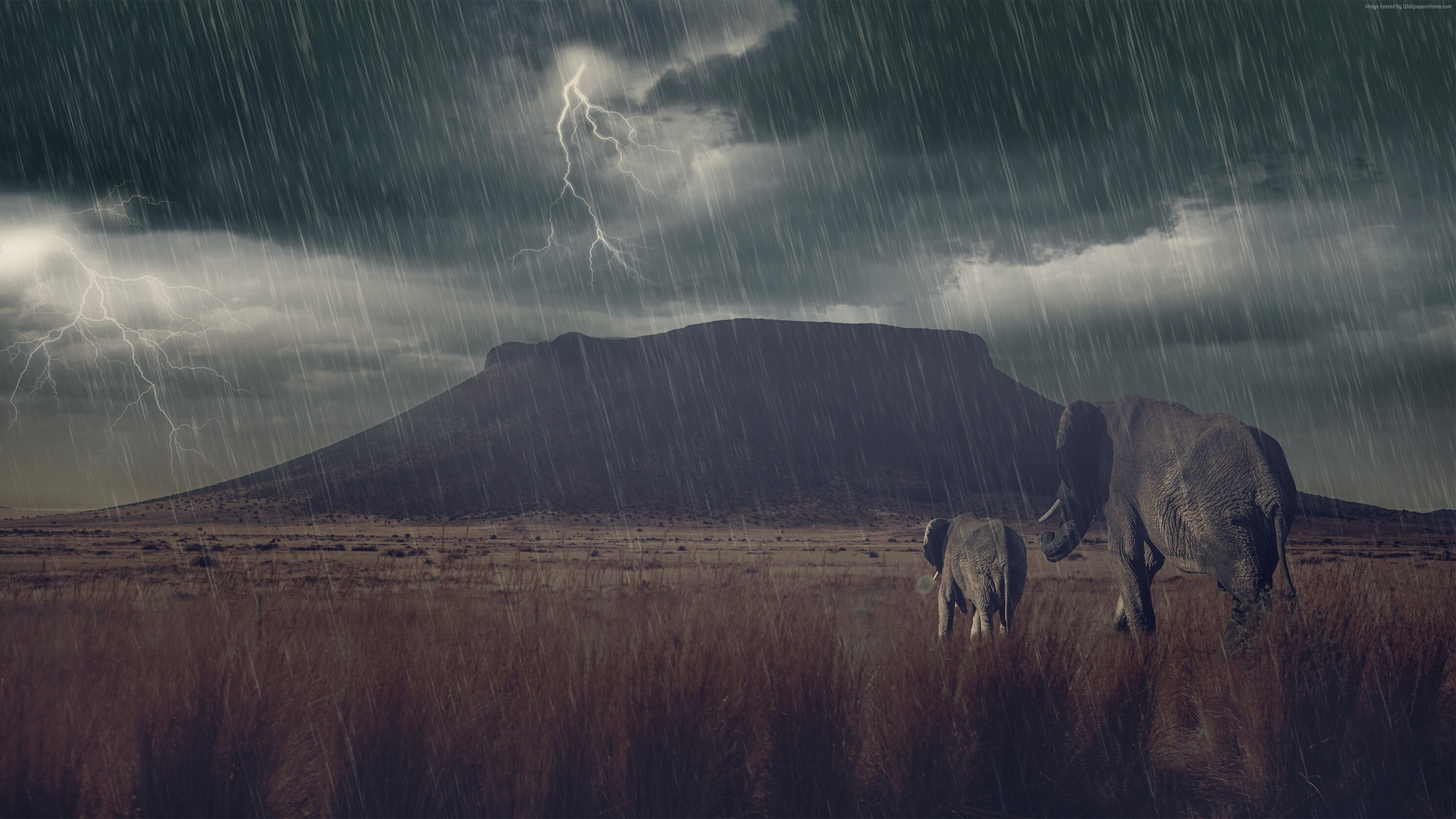 Wallpaper Elephant, mountains, storm, meadow, Animals