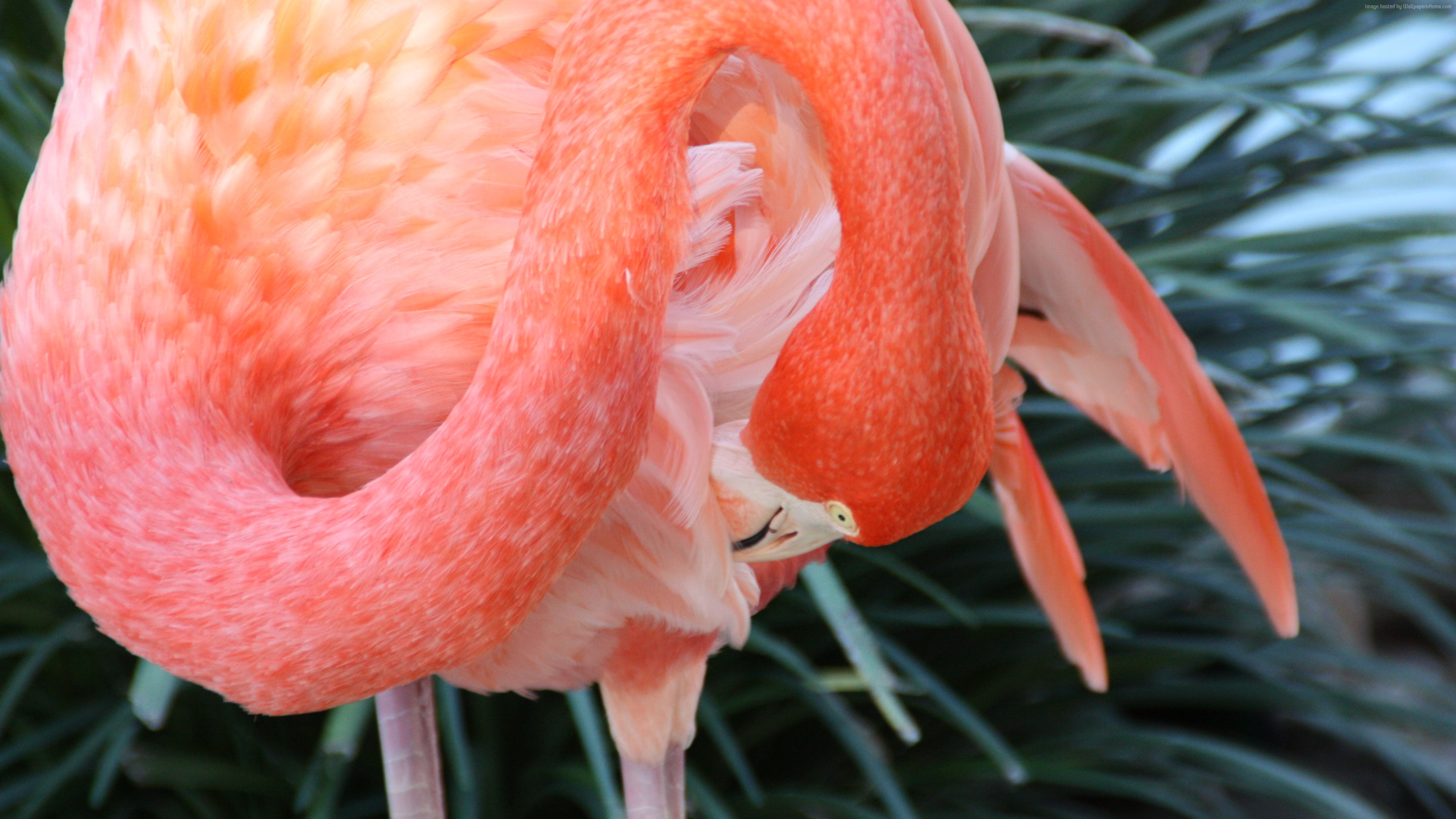 Wallpaper Flamingo, HD, 4k wallpaper, Sun Diego, zoo, bird, red, plumage, tourism, pond, Animals
