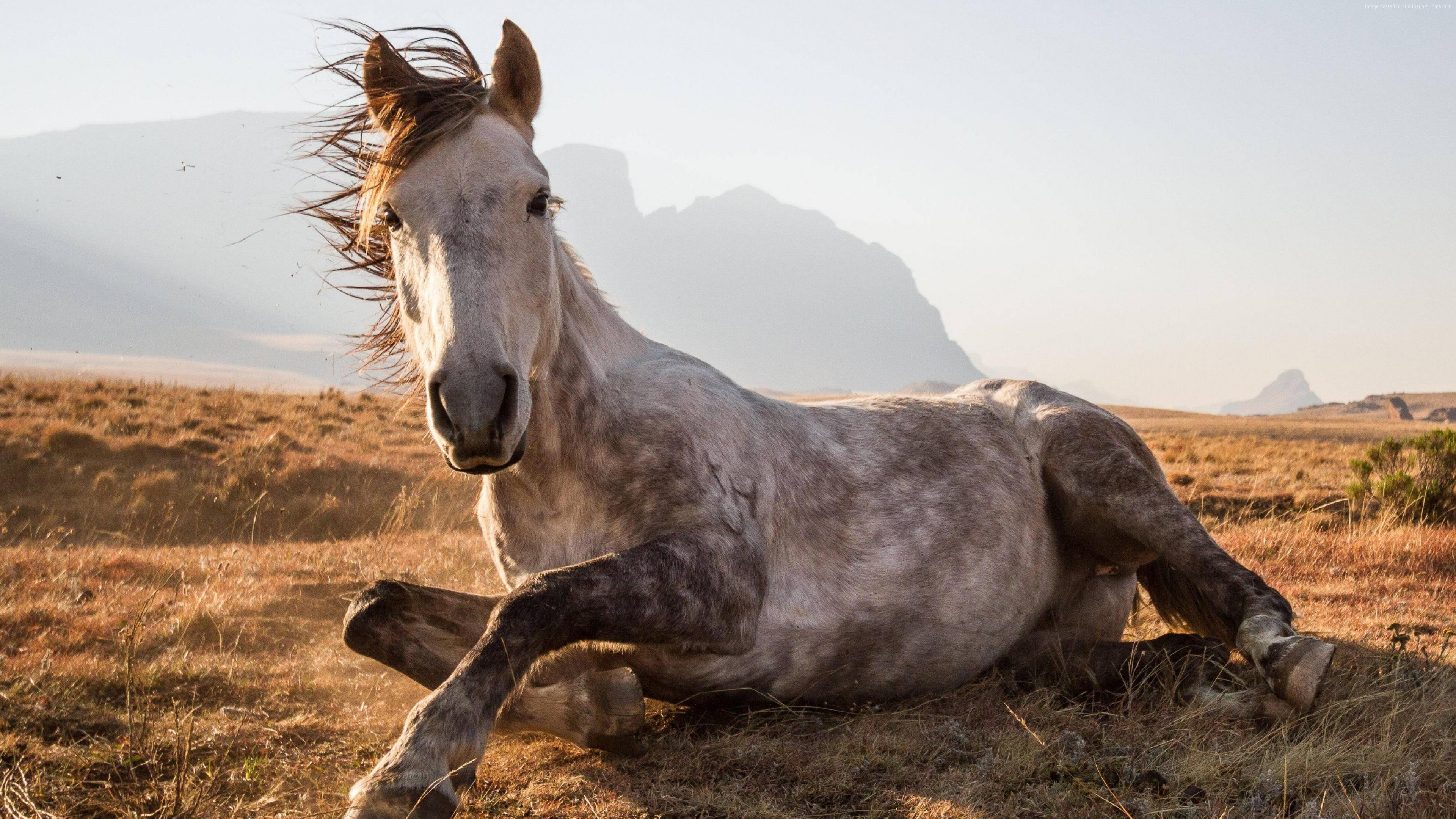 Wallpaper Horse, Sehlabathebe National Park, Lesotho, National Geographic Traveler Photo Contest, Animals