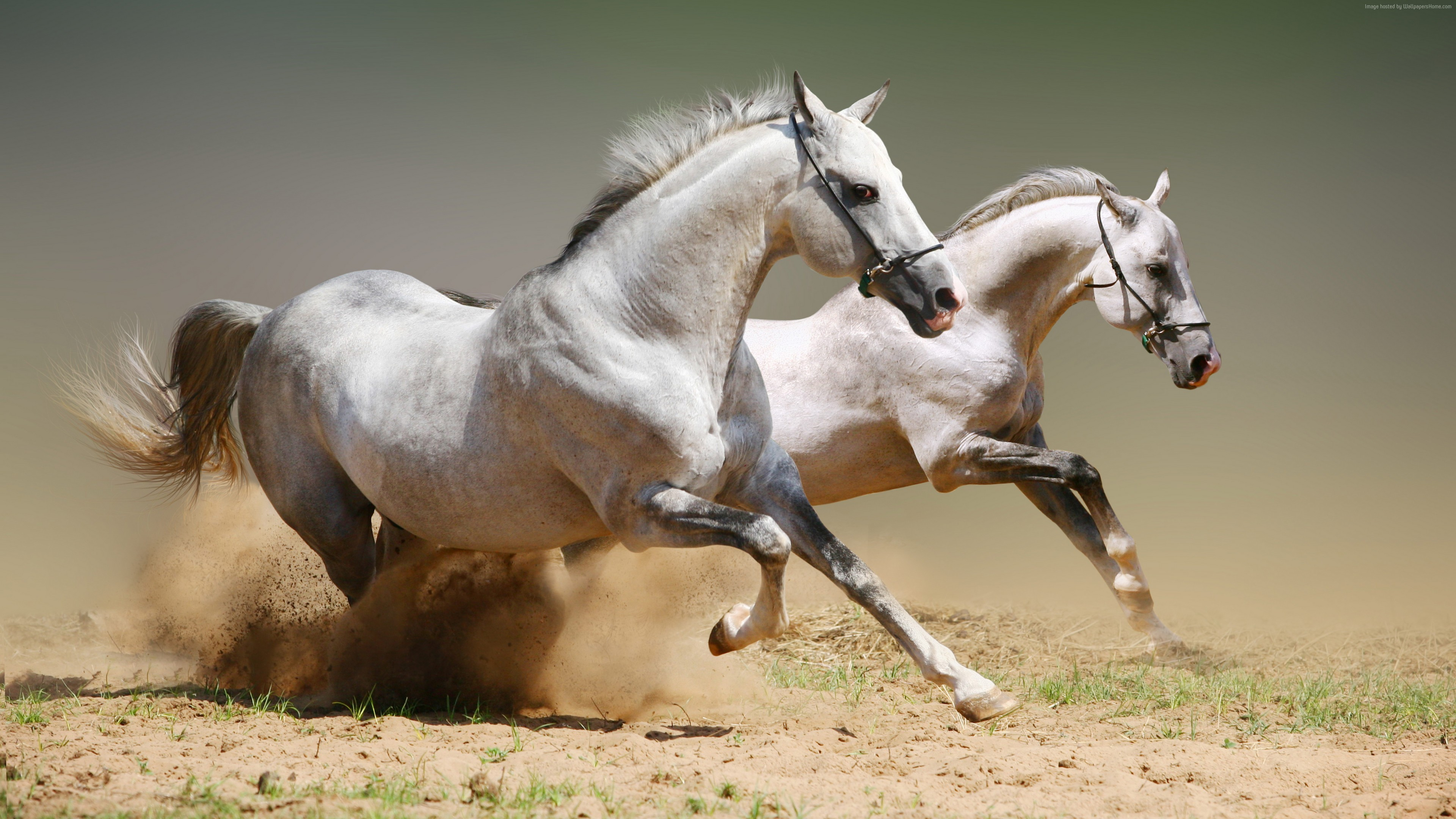 Wallpaper Horse, cute animals, gallop, Animals